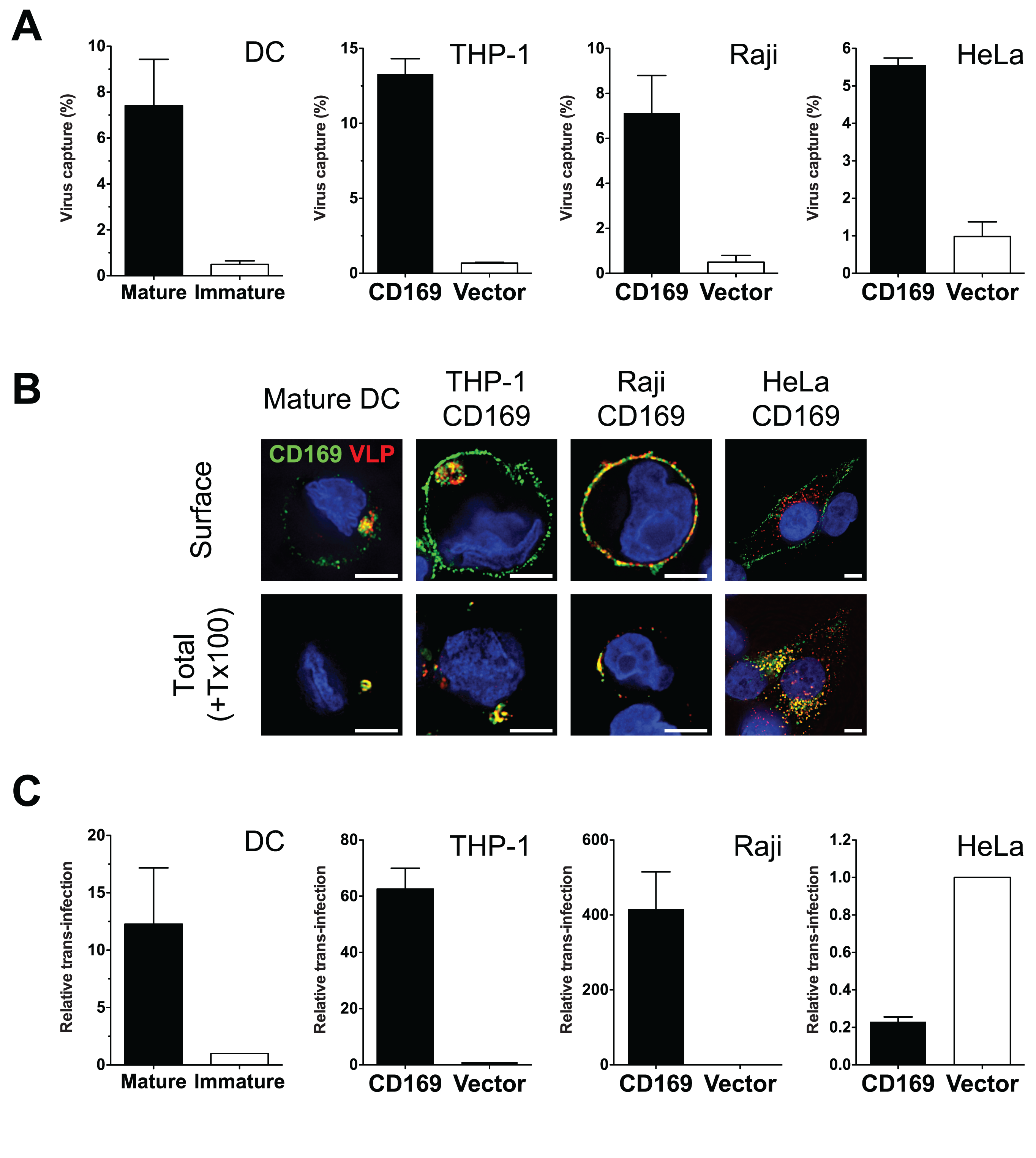 THP-1/CD169 cells recapitulate mature DC-mediated HIV-1 capture, trafficking and trans-infection of CD4<sup>+</sup> T cells.