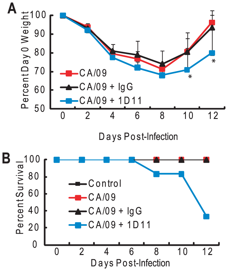 Depletion of TGF-β alters morbidity in HK/486-infected mice.
