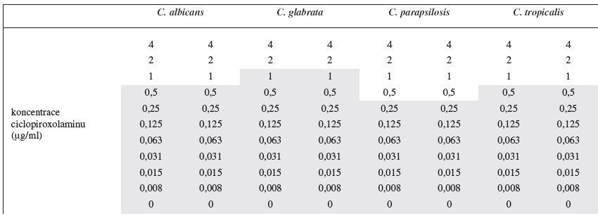 Odečet minimální inhibiční koncentrace v 96 jamkové mikrotitrační destičce