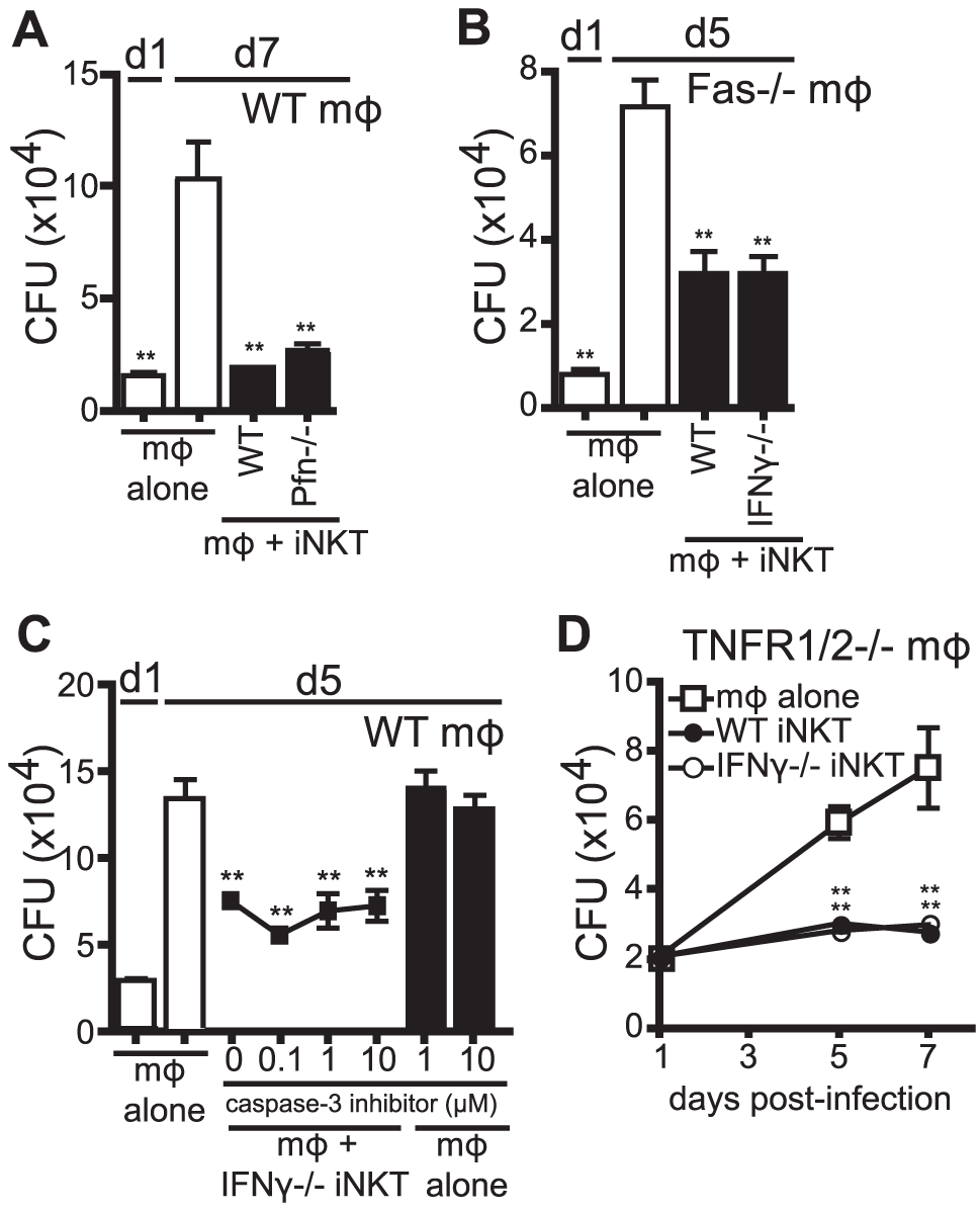 IFNγ-independent antimicrobial effector function of iNKT cells is independent of cytolytic activity.