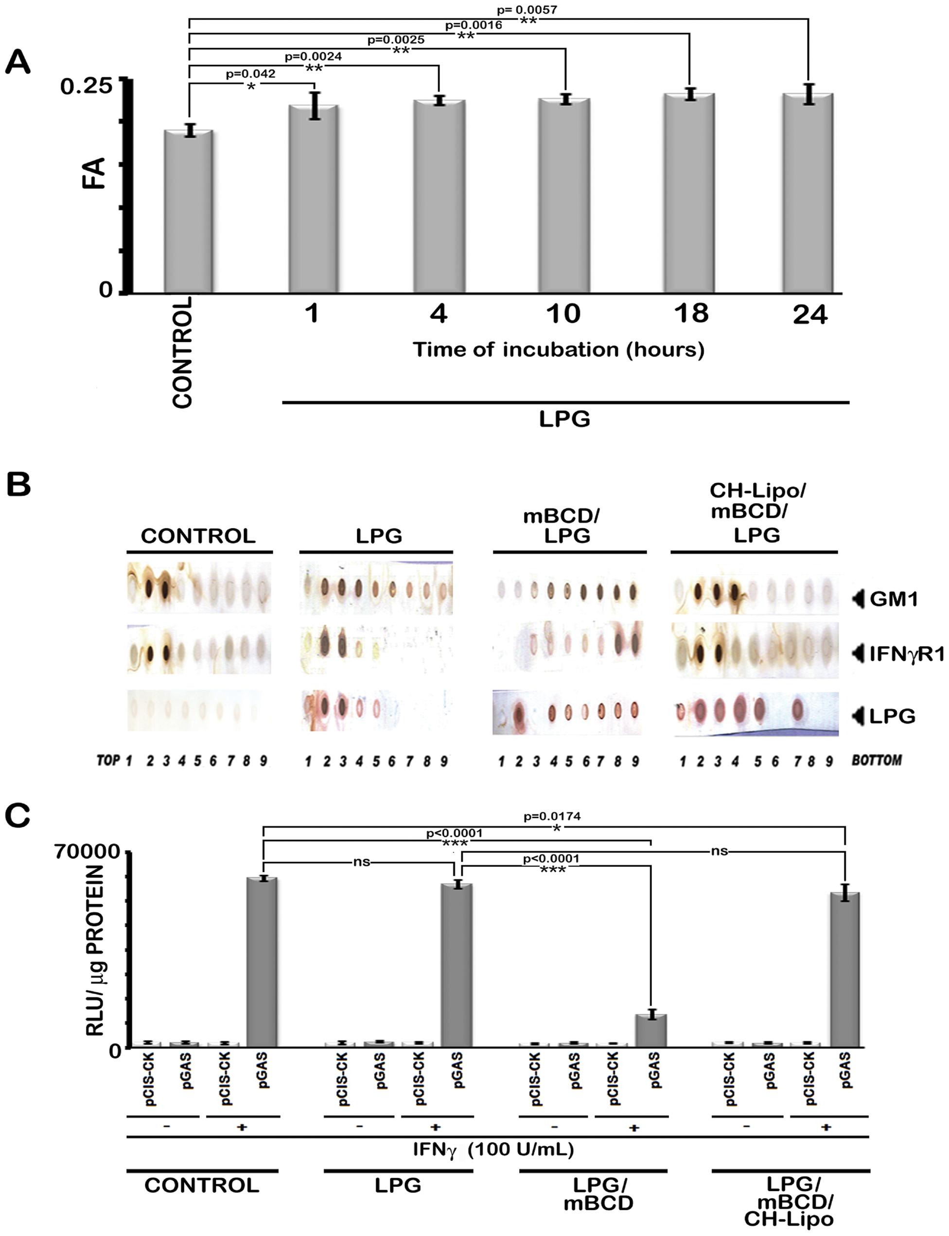 Analysis of LPG-MØ interactions.