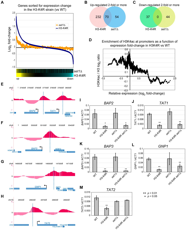 Global mRNA Expression Profiles of <i>set1</i>Δ and <i>H3-K4R</i> Mutant Strains.