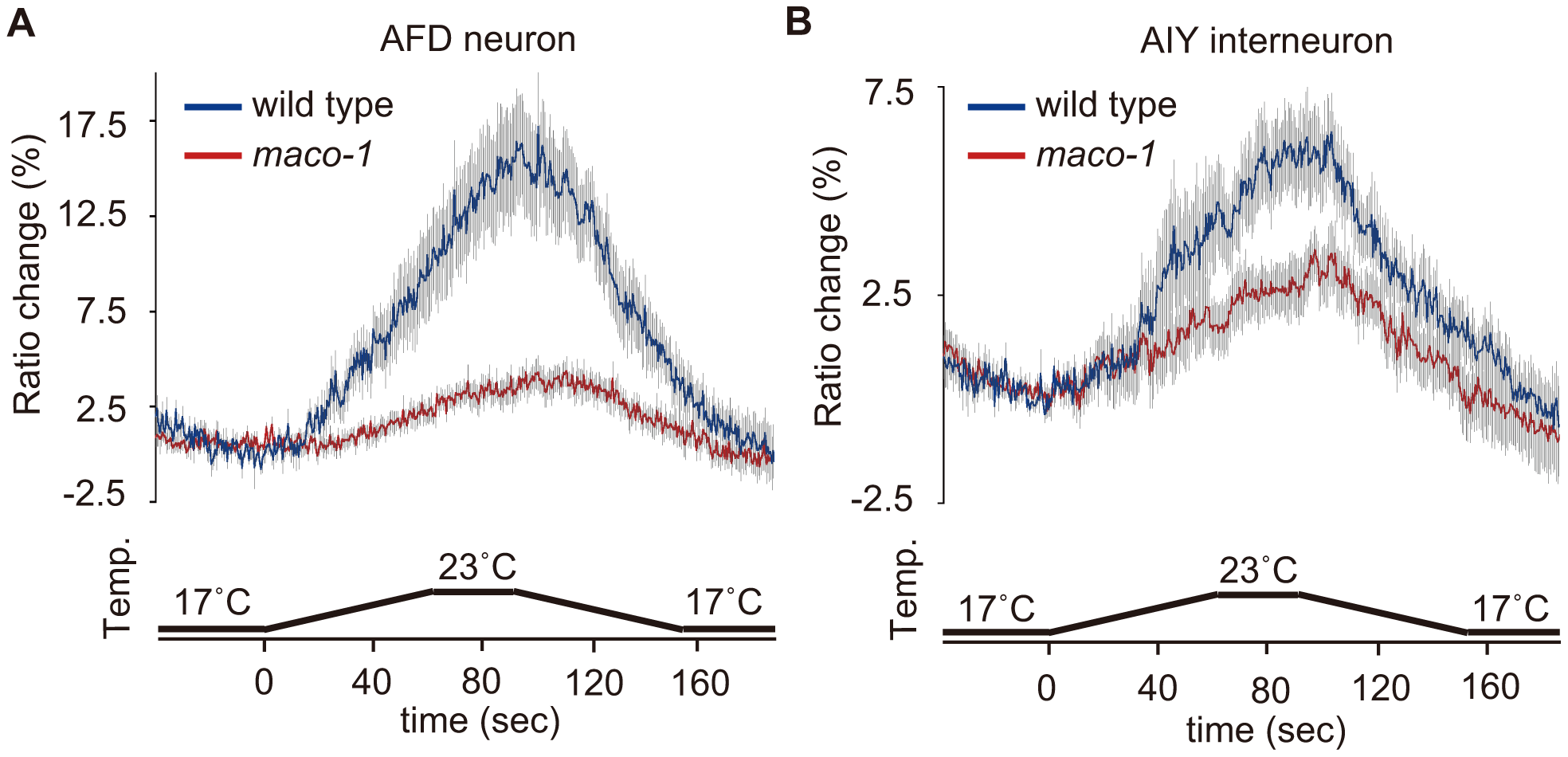 Calcium imaging of neurons in the thermotaxis circuit among wild-type or <i>maco-1</i> mutants.