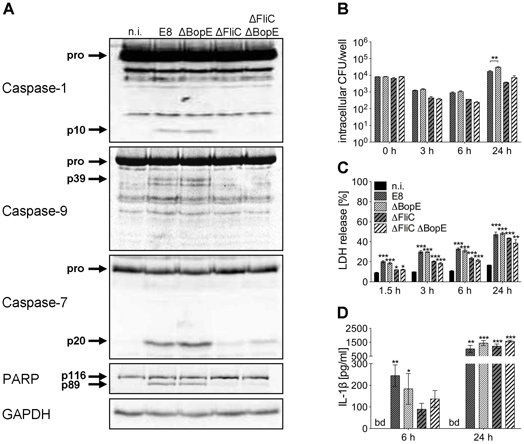Deletion of <i>B. pseudomallei</i> BopE does not influence caspase-1 activation in macrophages.