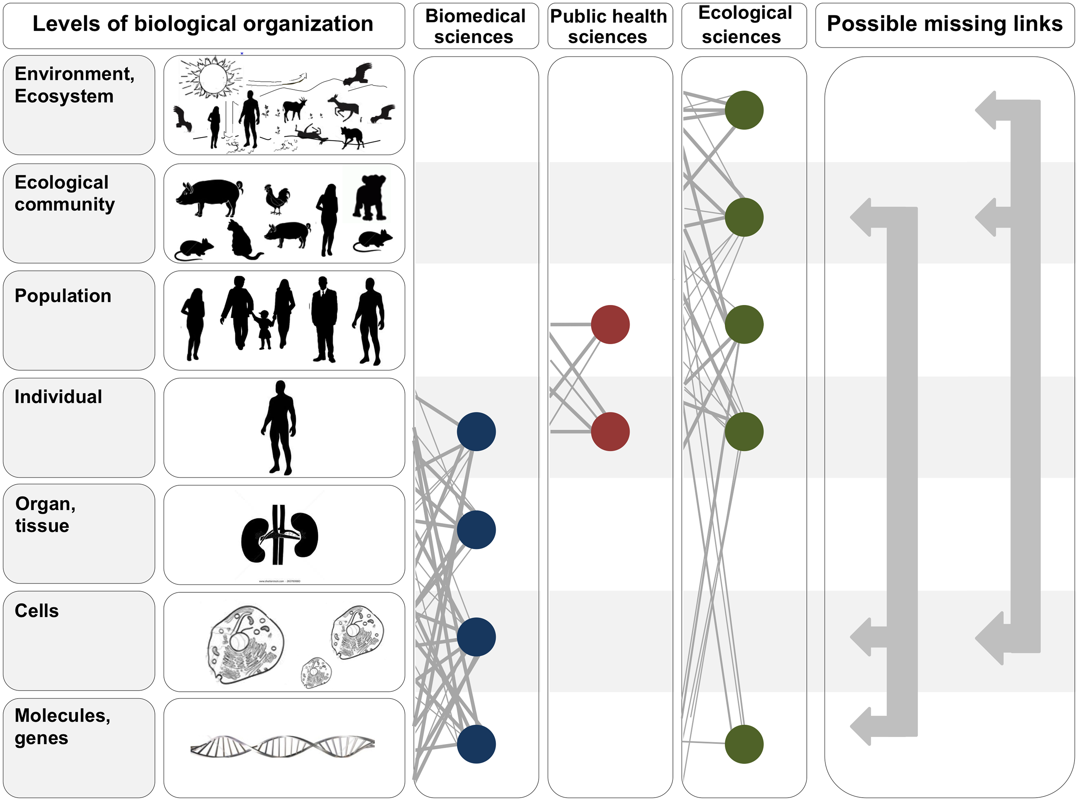 In the two leftmost panels, we depict the hierarchy of biological organization, from molecules and genes to ecosystems.