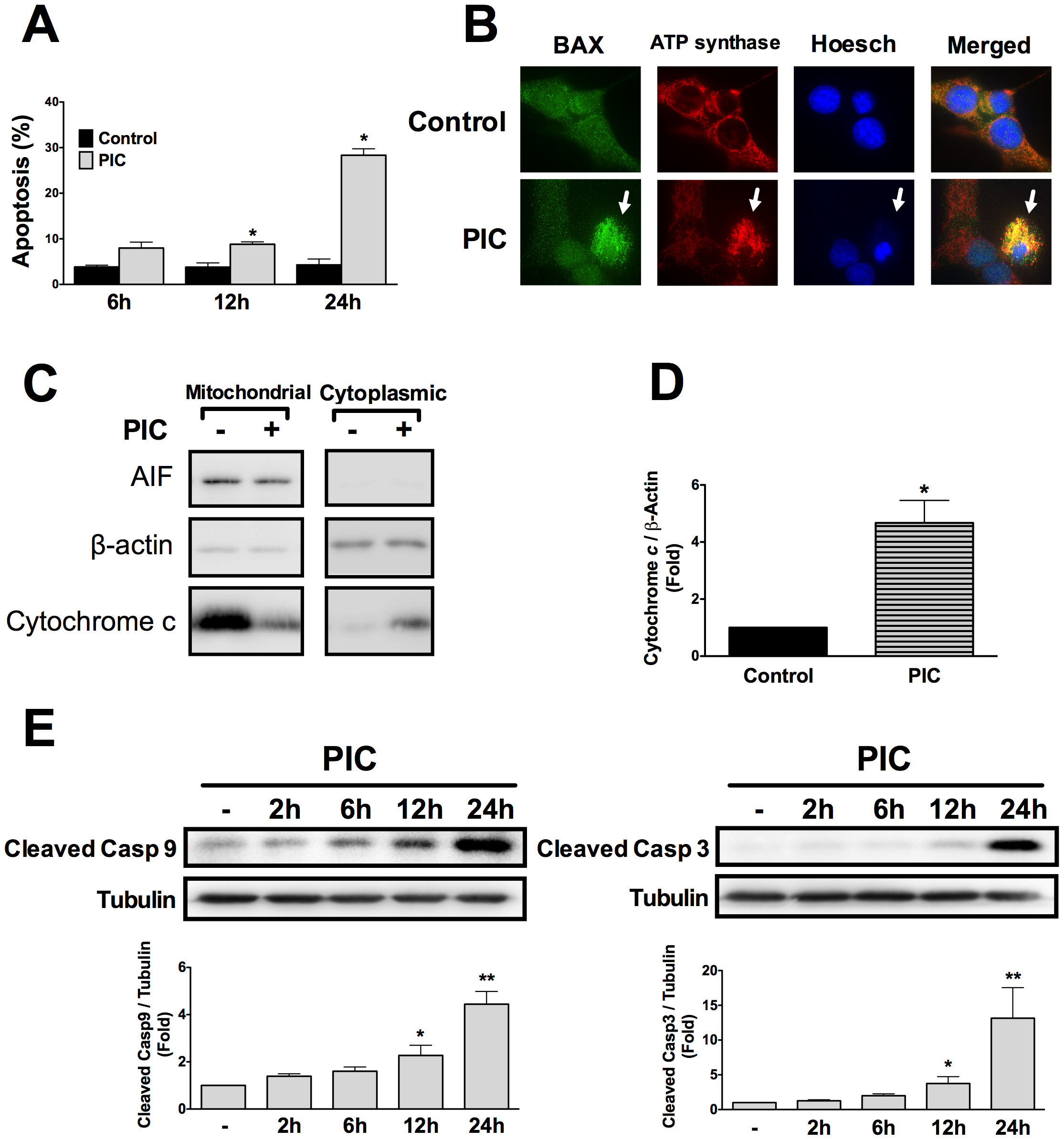 Internal dsRNA induces beta cell death via the mitochondrial pathway of apoptosis.