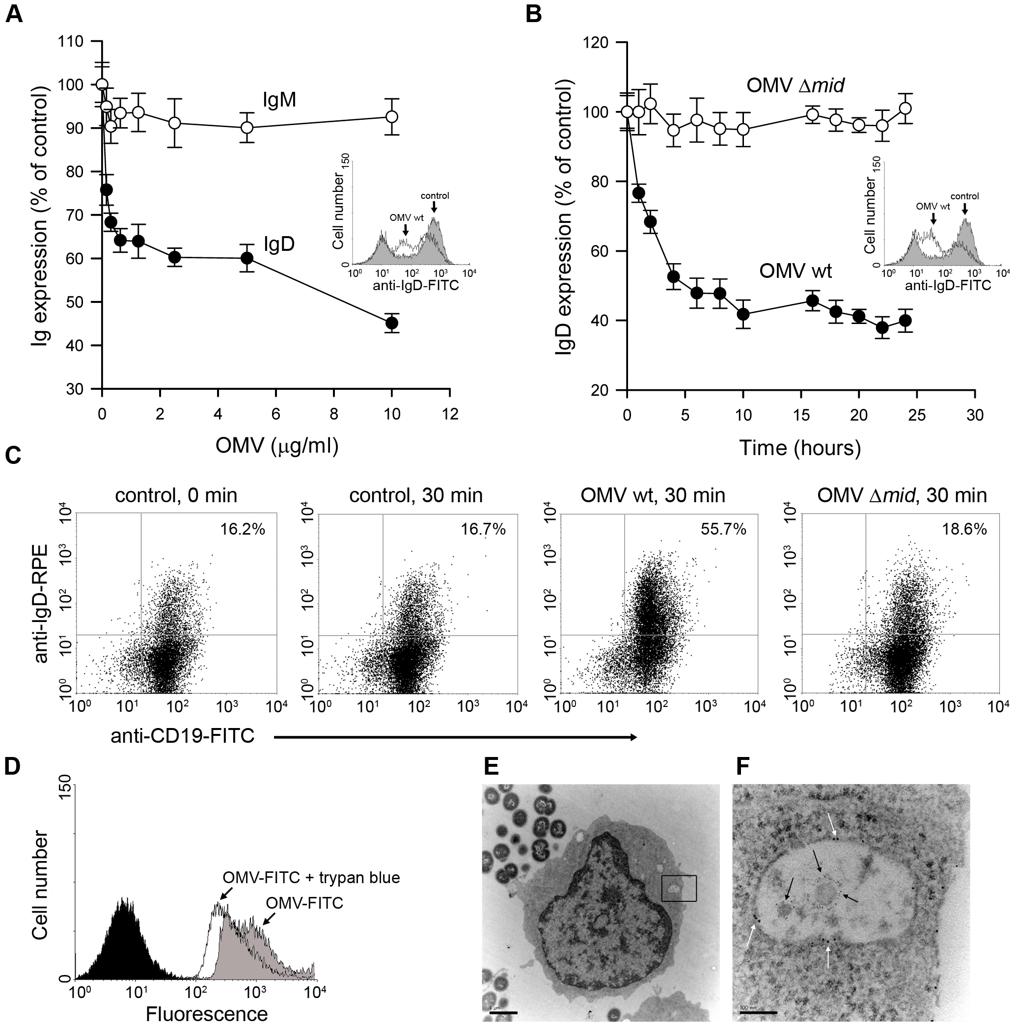 OMV induce a down-regulation of surface expressed IgD in a dose dependent manner and are internalised by tonsilar B cells.