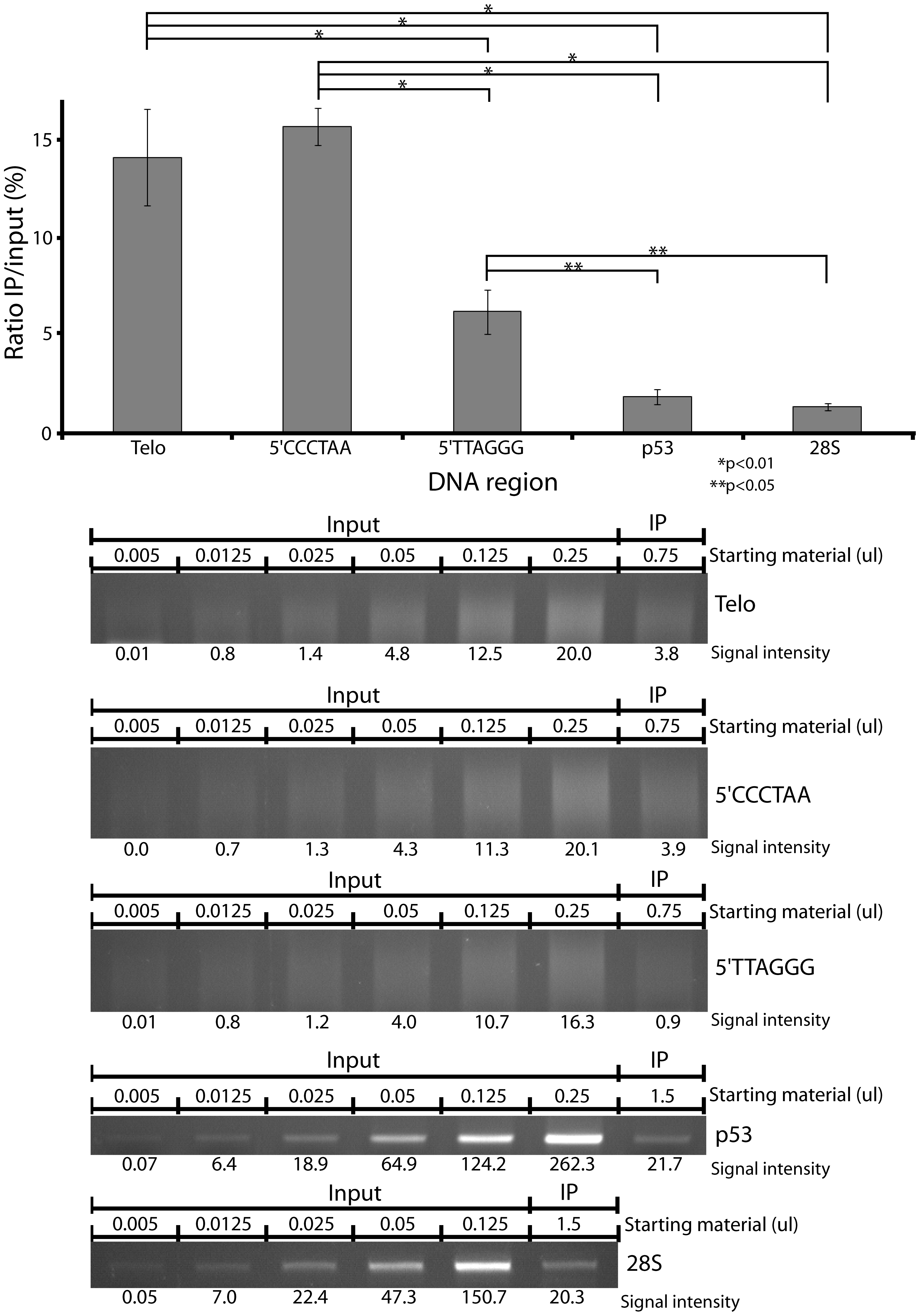 Hypersensitivity of telomeres relative to coding regions.