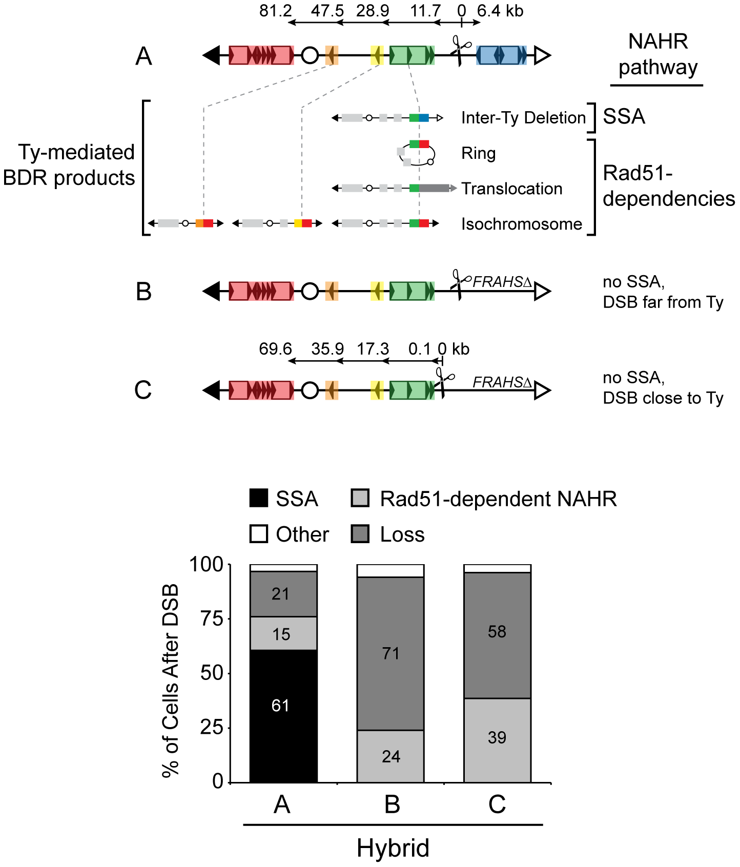 Pathway competition with DSB in unique DNA: SSA is most efficient and Rad51-dependent NAHR is inherently inefficient.
