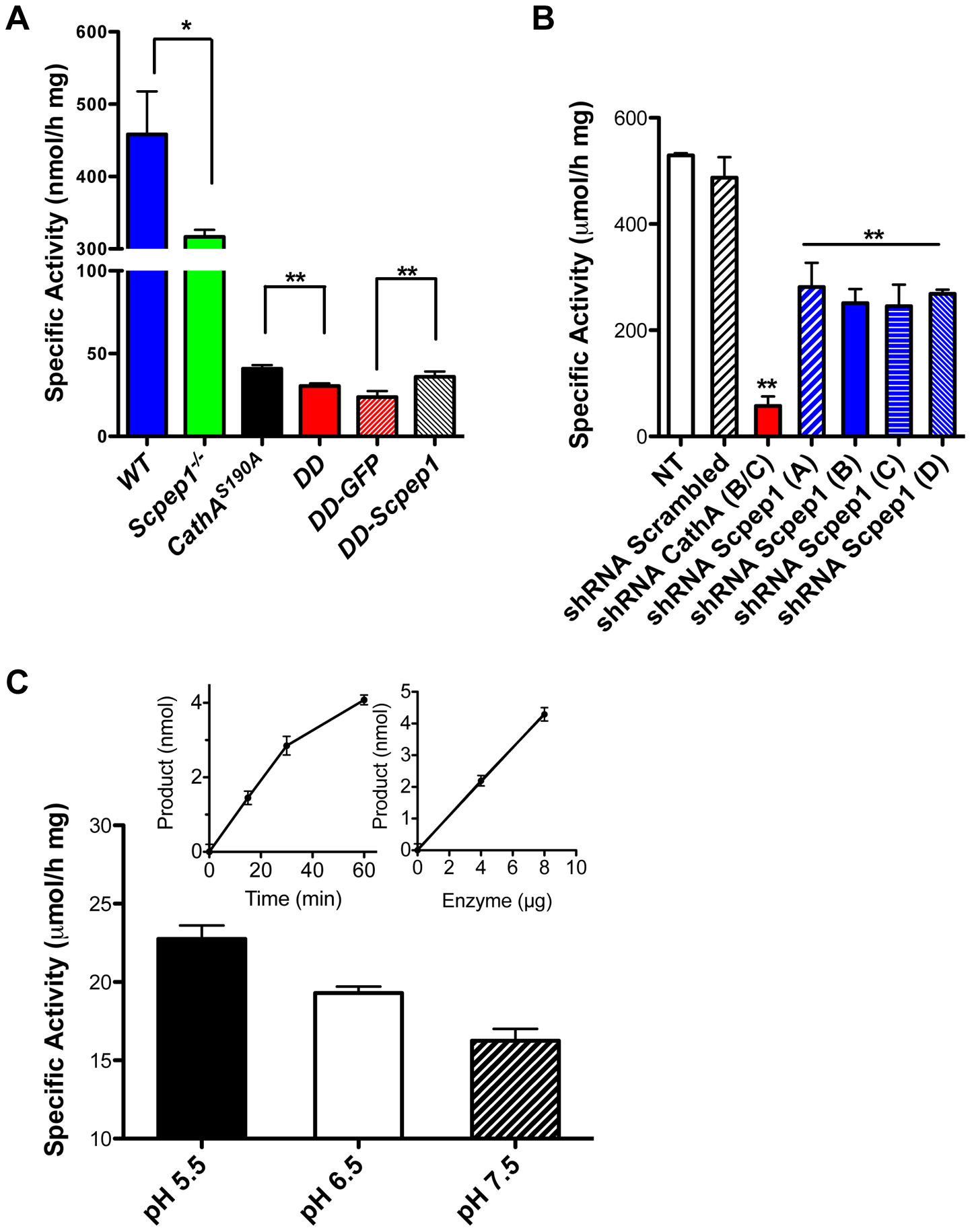 Scpep1 has carboxypeptidase activity against ET-1.