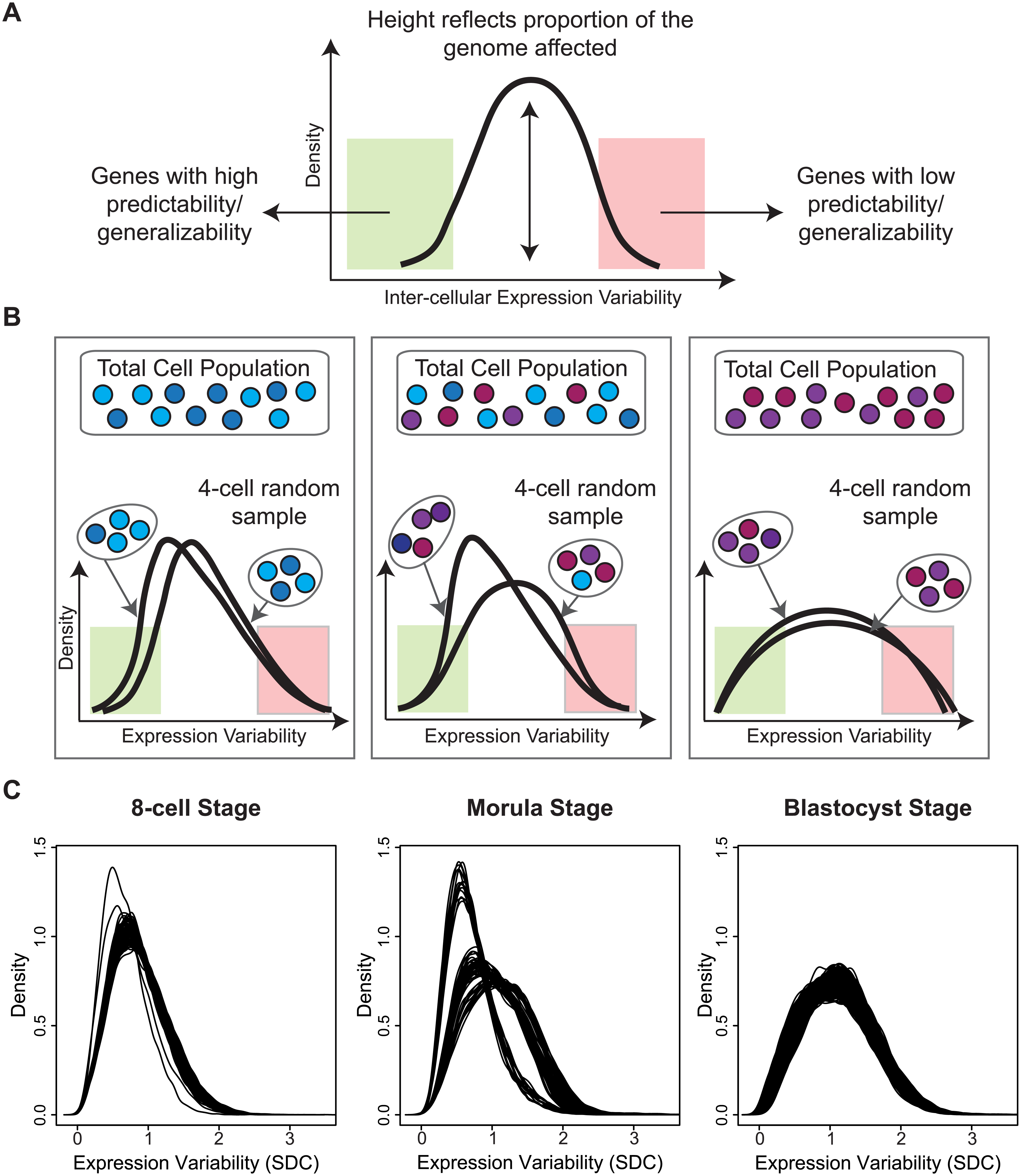 A snapshot of cellular heterogeneity across embryonic development.