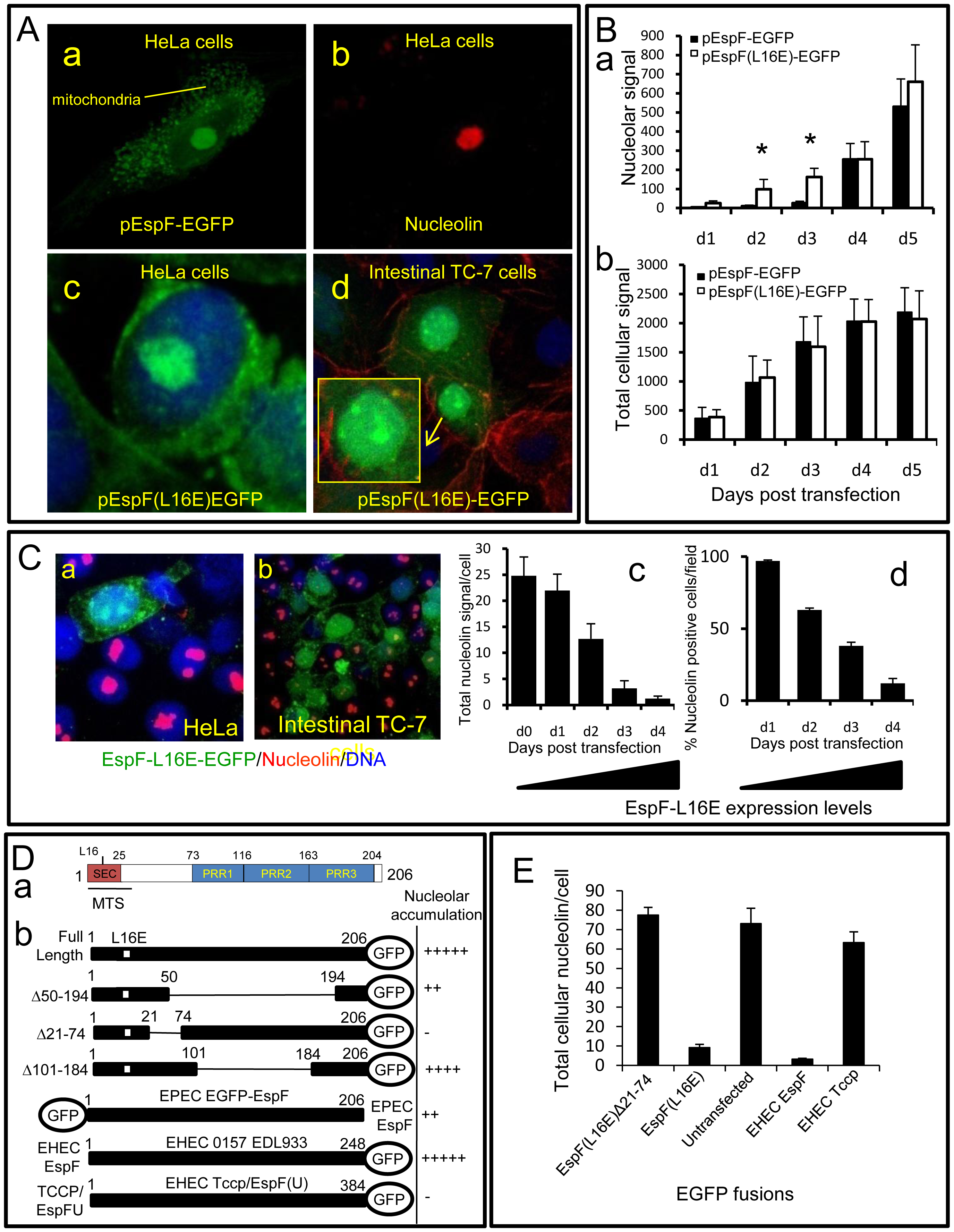 The N-terminal domain of EspF mediates nucleolar targeting and loss of nucleolin.