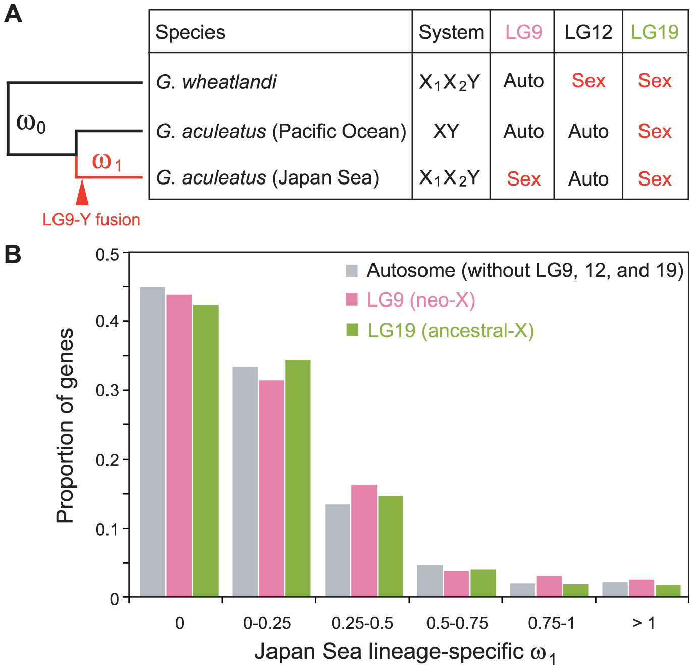 Faster protein sequence evolution of genes on LG9 in the Japan Sea lineage.