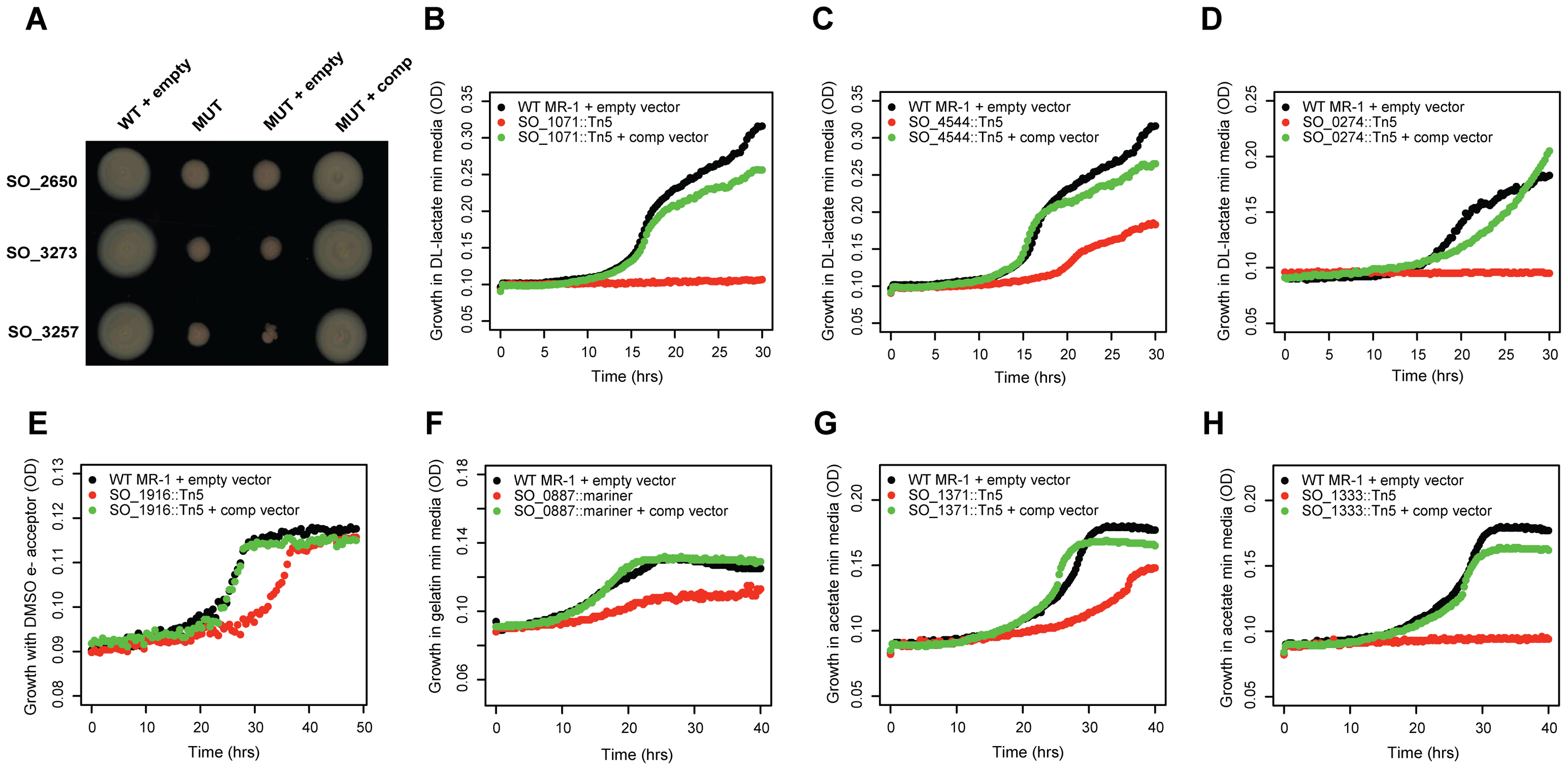 Validation of mutant phenotypes by genetic complementation.