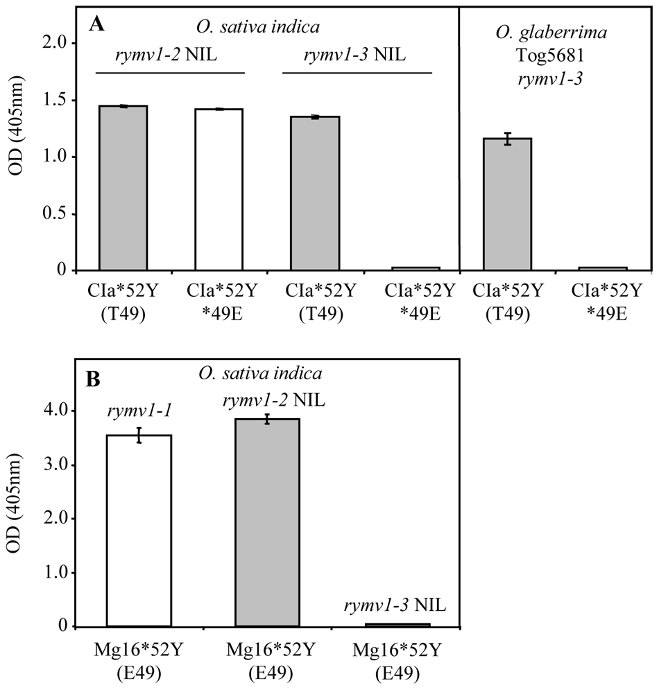Effect of the amino acid at codon 49 on virus accumulation in <i>RYMV1</i> resistant plants.