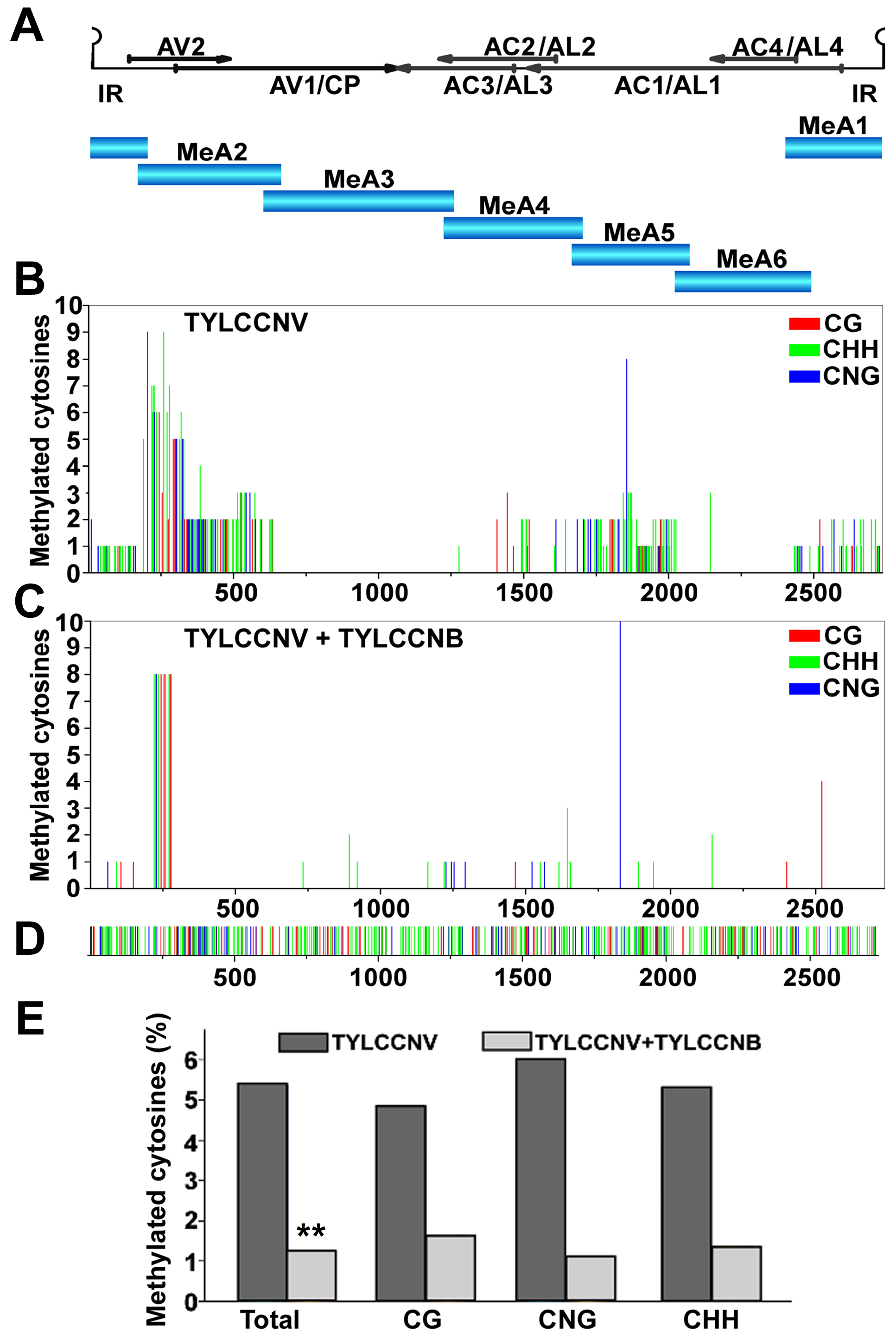 TYLCCNB reduces TYLCCNV DNA methylation genome-wide.