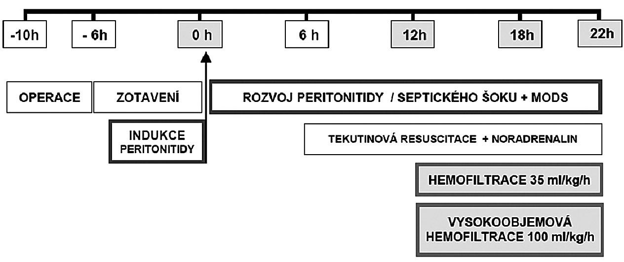 Schéma protokolu studie
