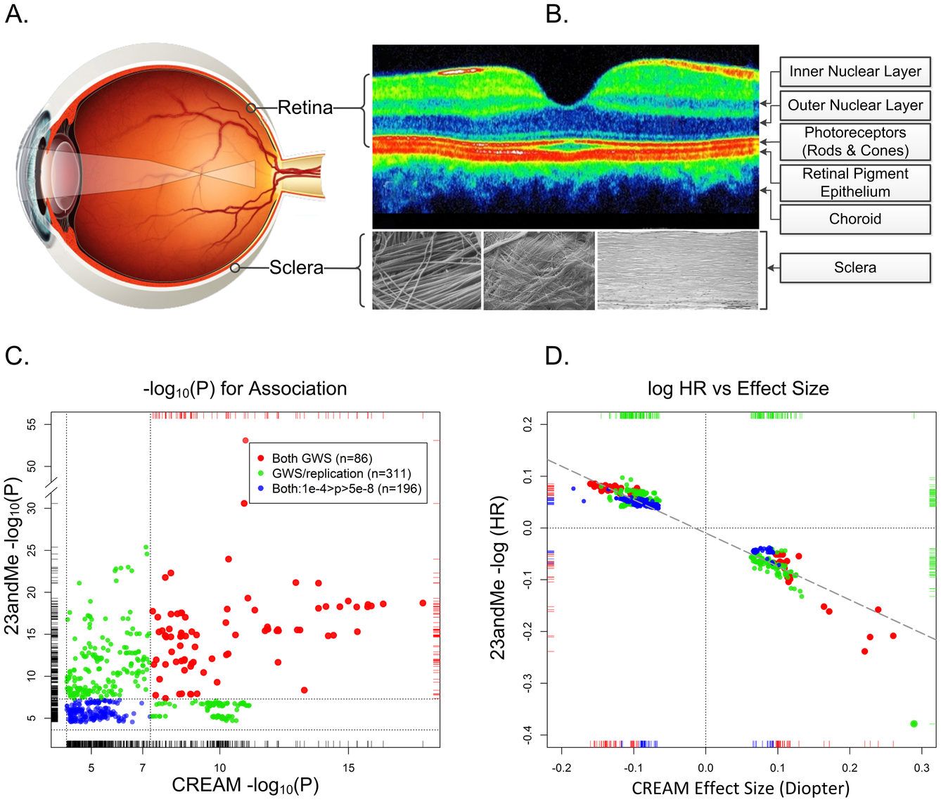 The physical, biological, and genetic basis of myopia.