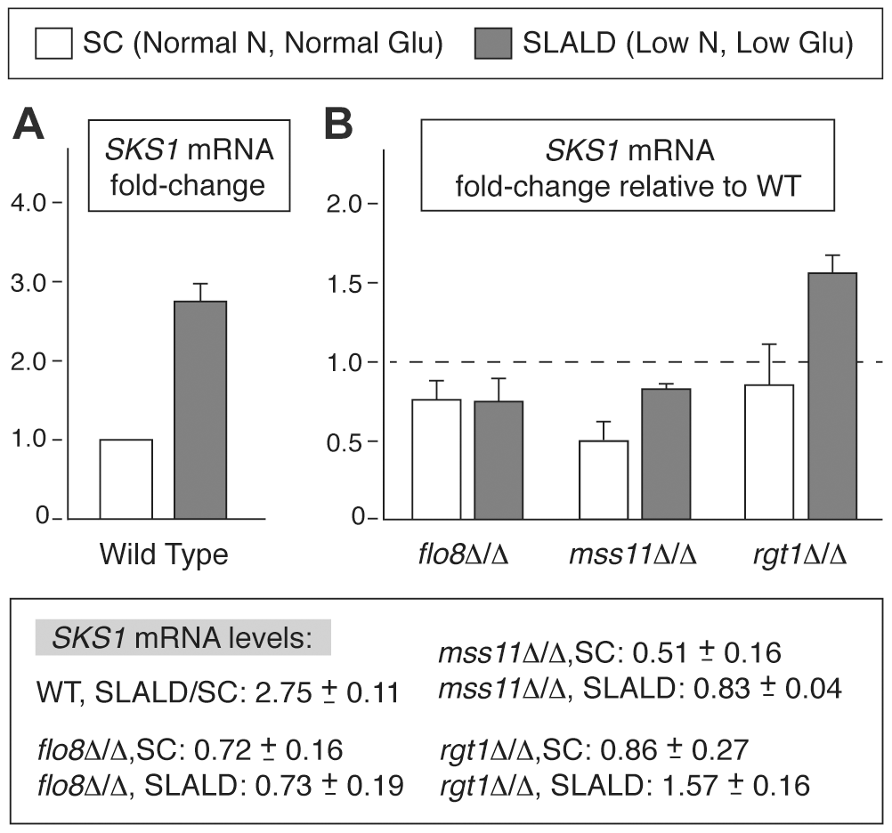 <i>SKS1</i> transcript levels are regulated in response to nitrogen and glucose levels.