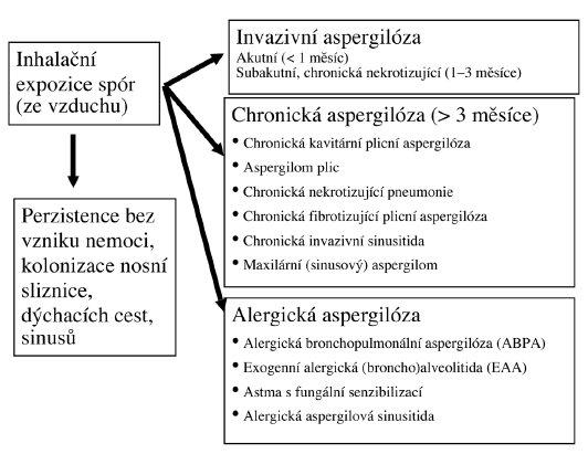 Klasifikace aspergilóz (upraveno podle Soubani et al. [14]) znamné důsledky