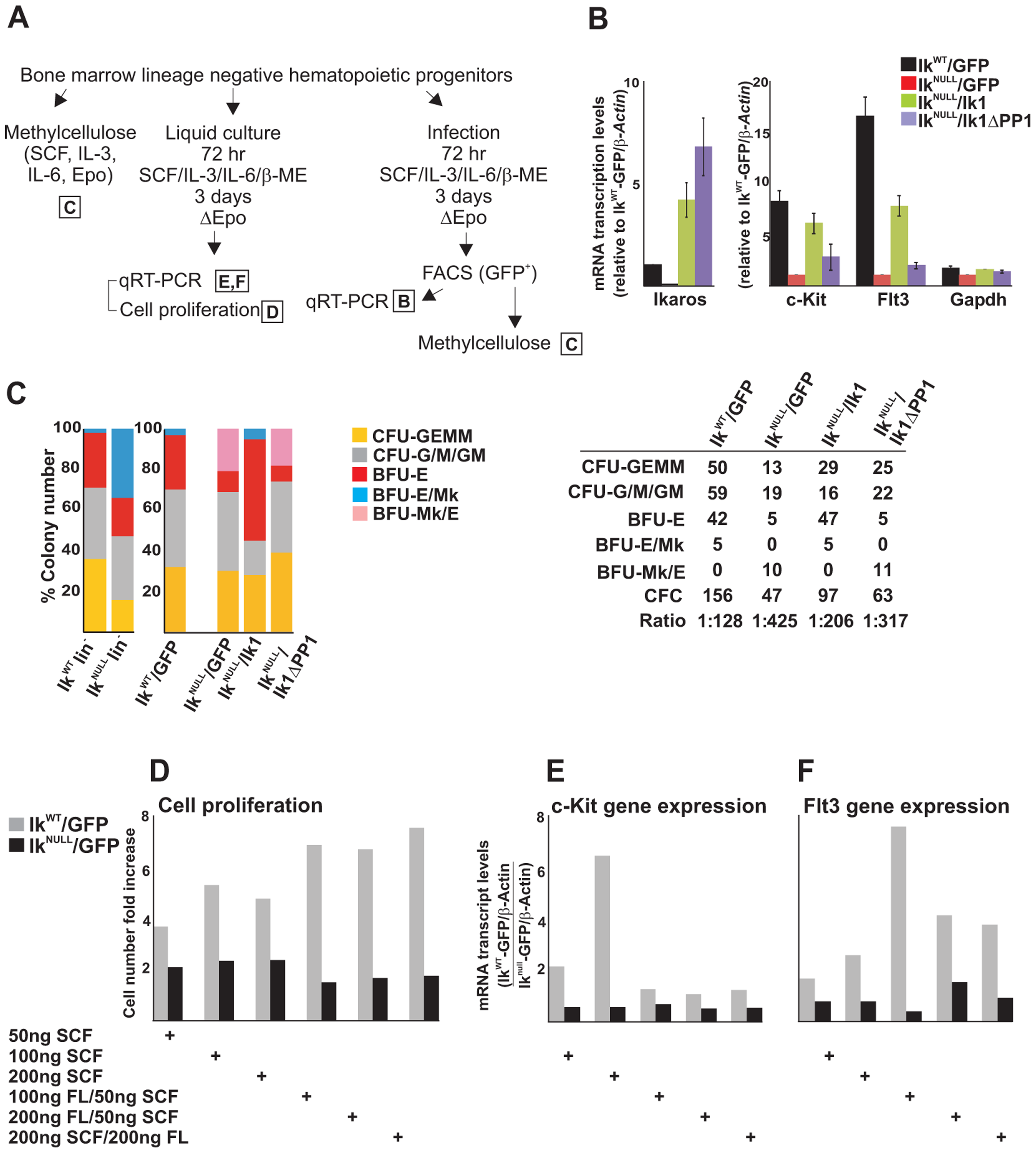 The IKAROS-PP1 interaction is required for normal hematopoietic differentiation.
