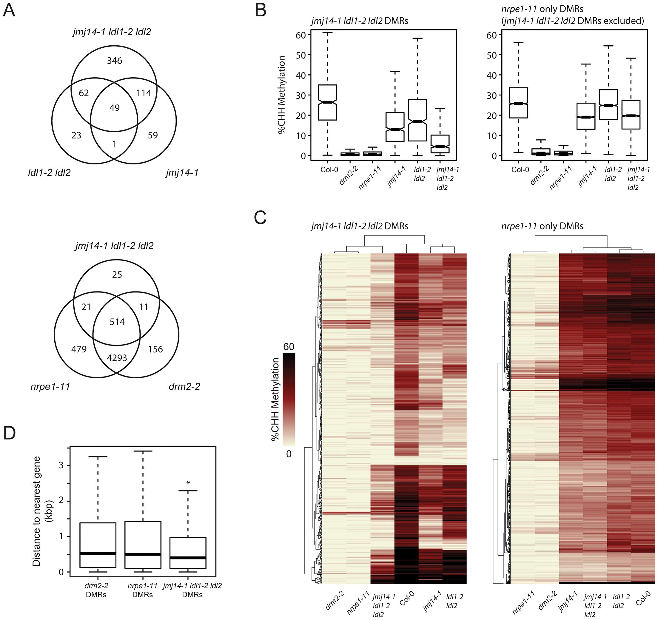 De novo identification of DMRs in <i>jmj14-1 ldl1-2 ldl2</i> and <i>nrpe1-11</i> mutant backgrounds.