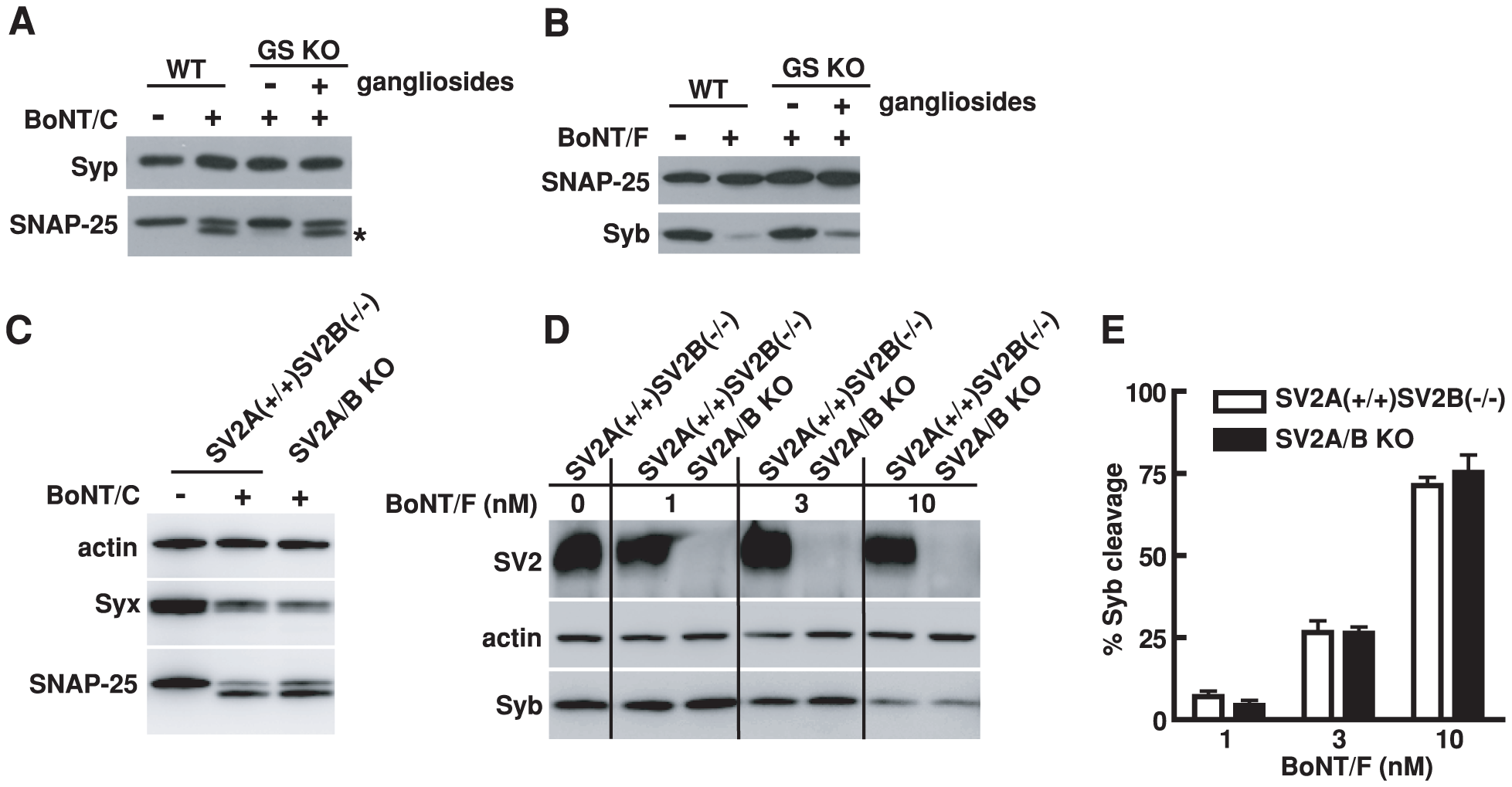 Entry of BoNT/C and BoNT/F into hippocampal neurons requires PSG but not SV2.