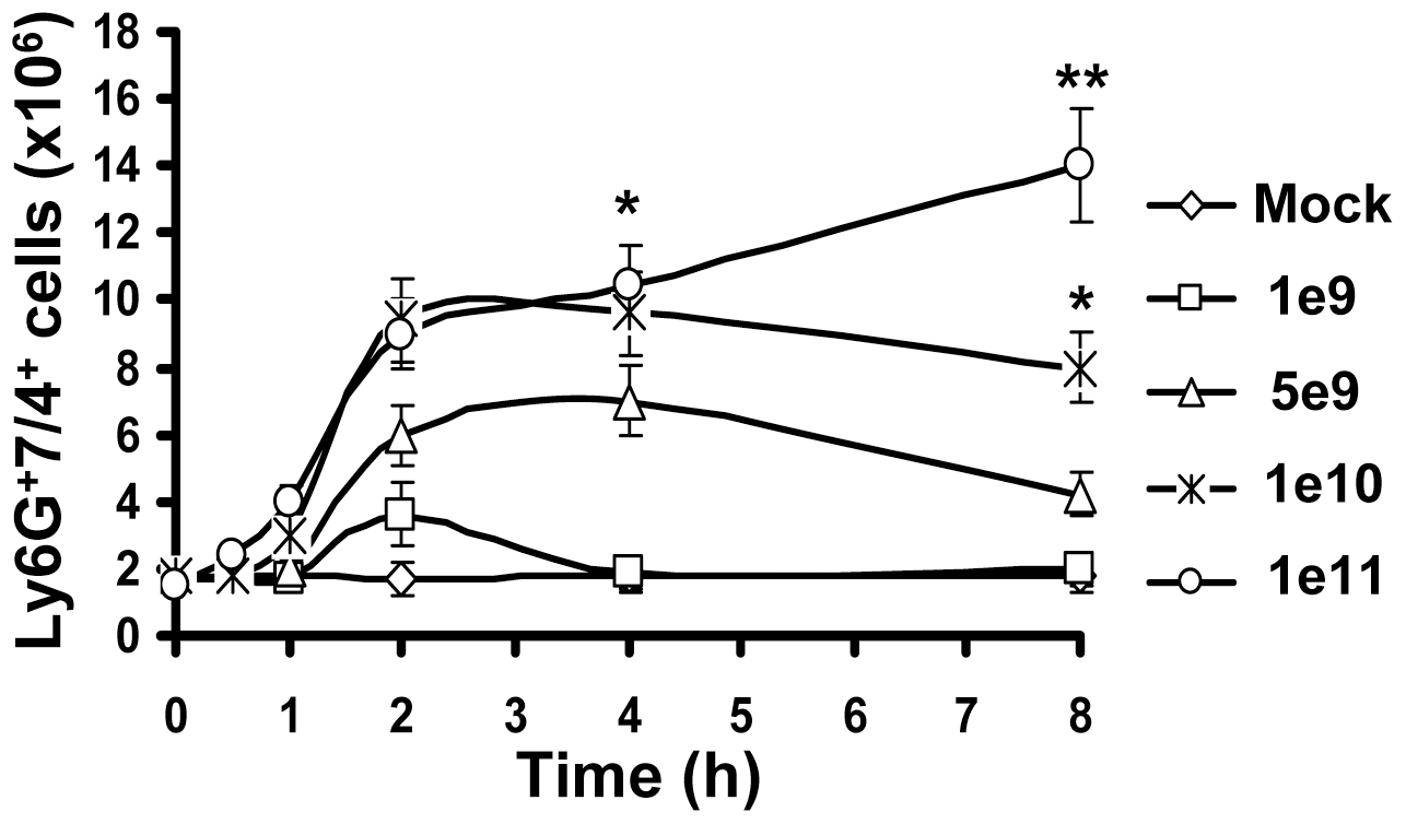 Kinetics of Ly-6G<sup>+</sup>7/4<sup>+</sup> leukocyte recruitment and retention in the spleen in response to intravascular administration of adenovirus.