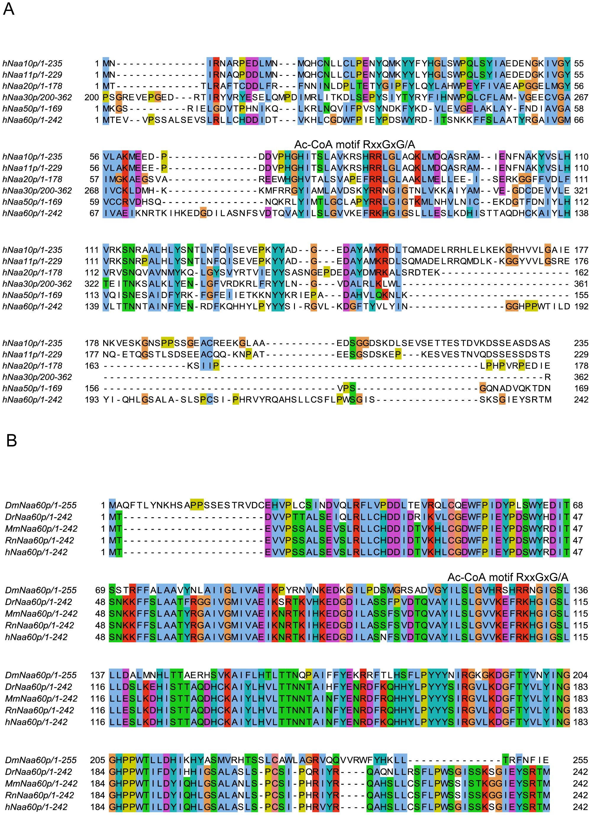Amino acid sequence alignments of hNaa60p and other NATs.
