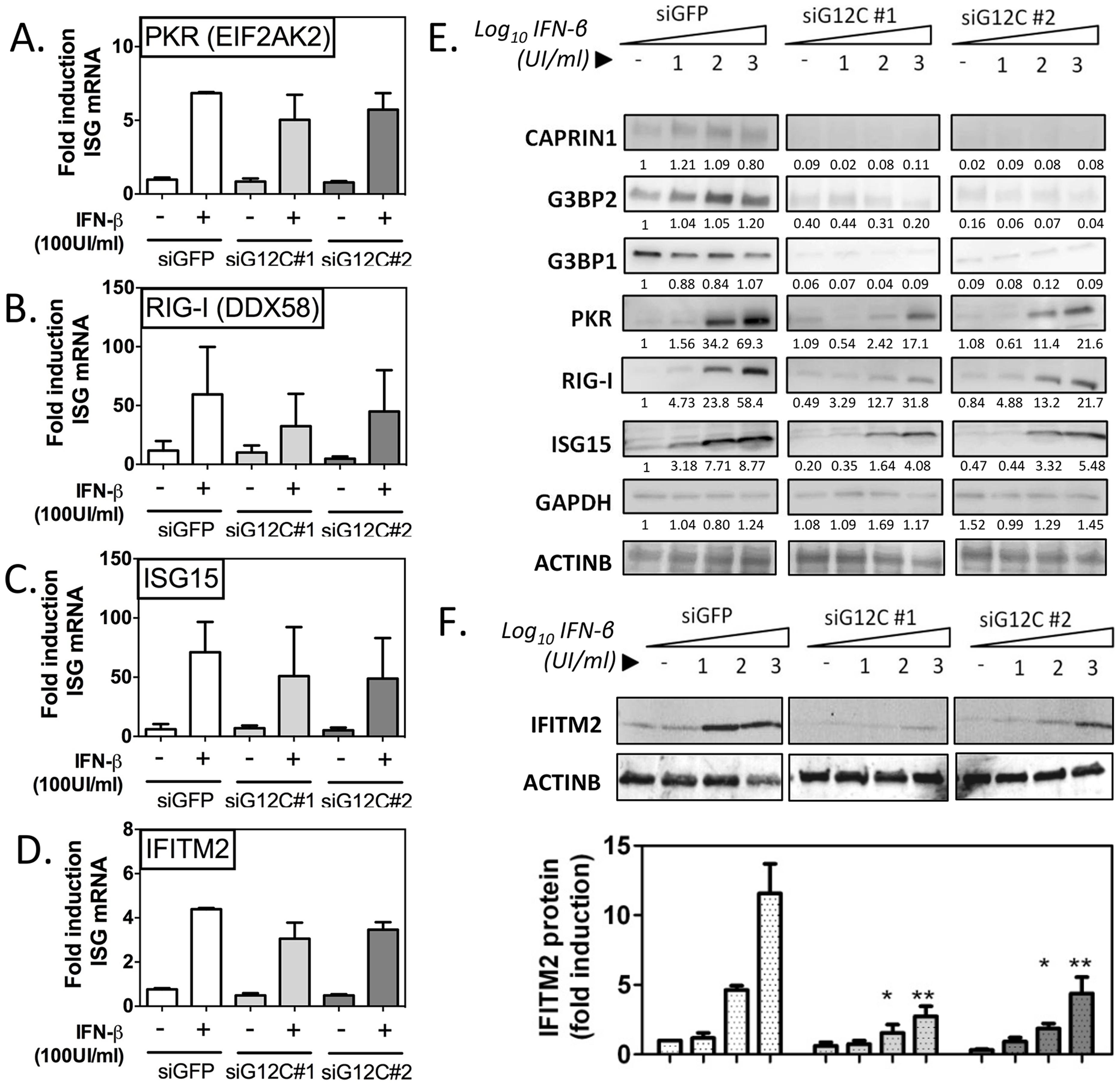 G3BP1, G3BP2 and CAPRIN1 regulate establishment of the antiviral state.