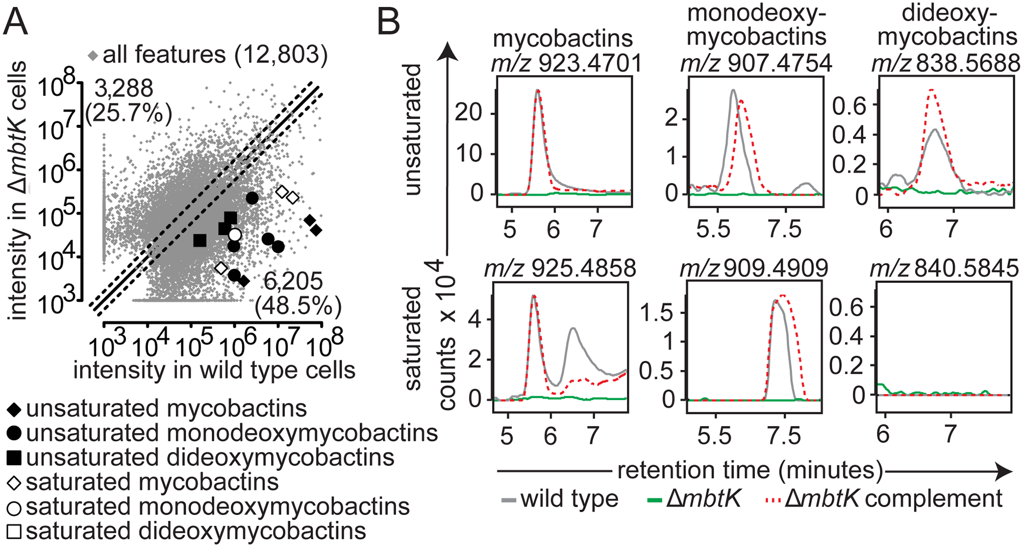 <i>mbtK</i> is required for mycobactin biosynthesis.