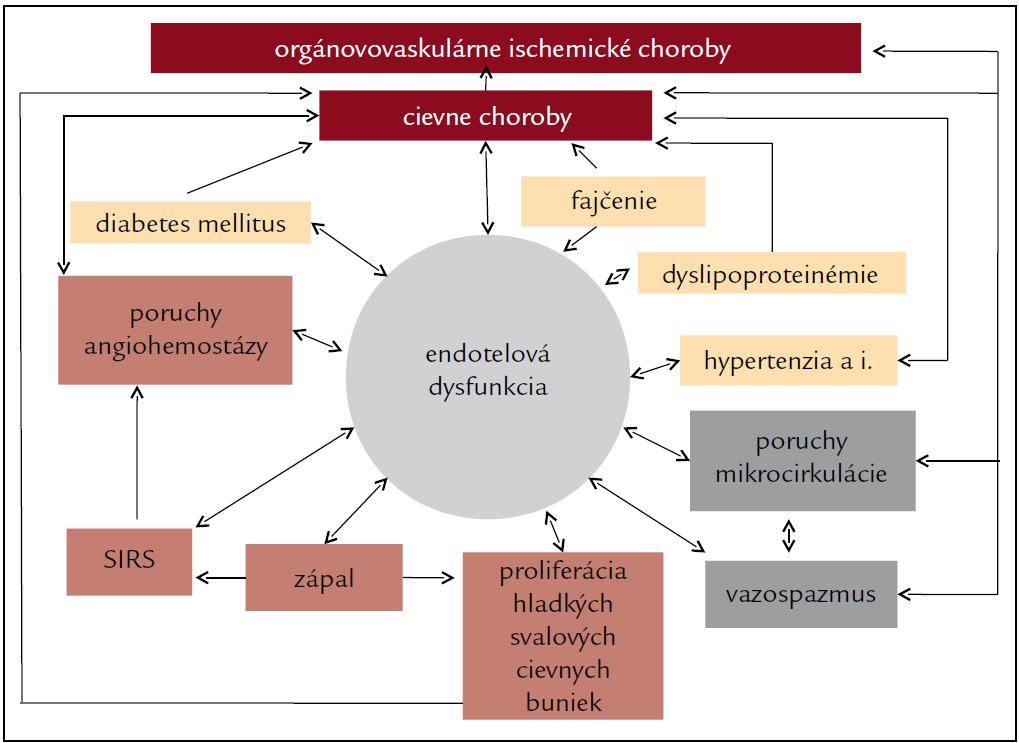 Endotelová dysfunkcia [16].