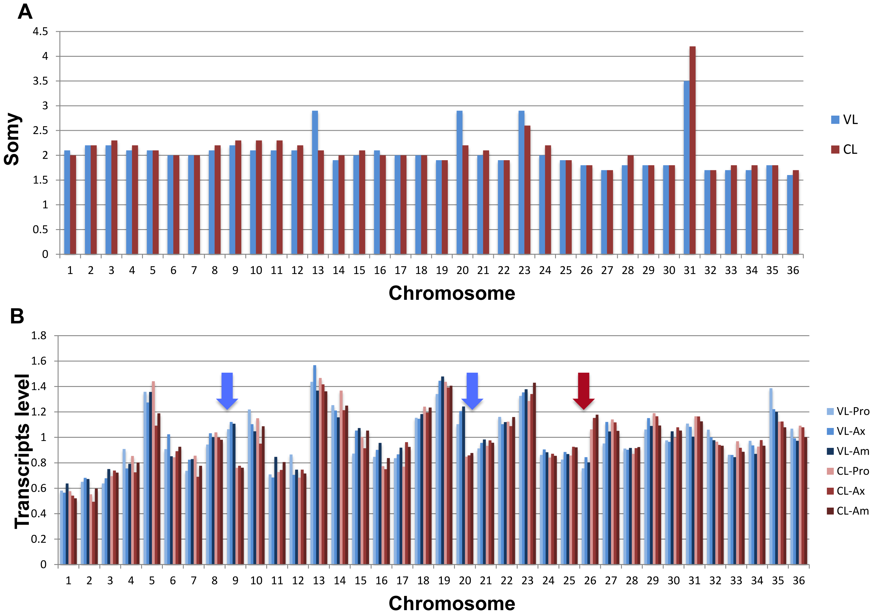 Chromosome copy number comparison between the VL-SL and CL-SL strains (Panel A).
