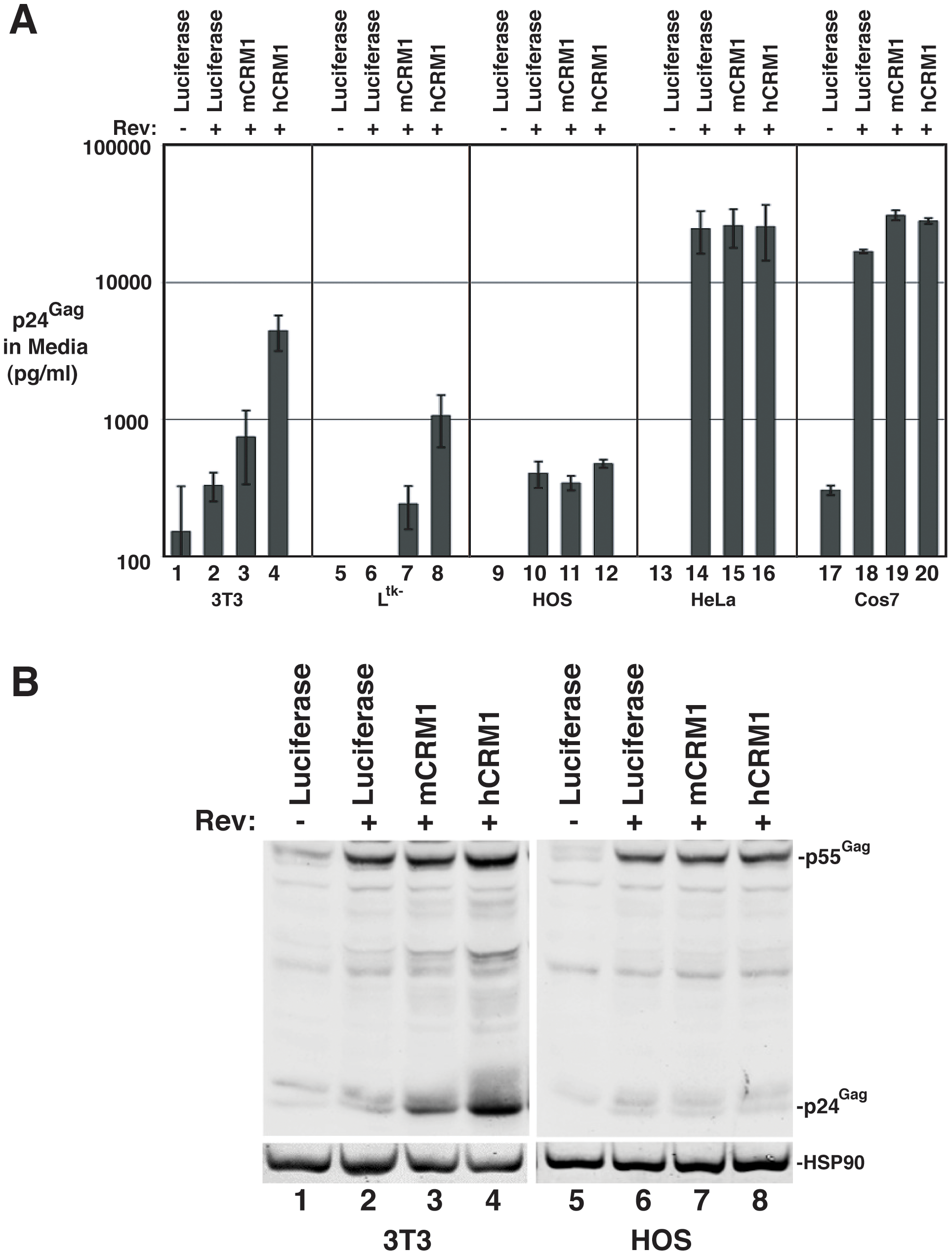hCRM1 effects on HIV-1 VLP production are species-specific.