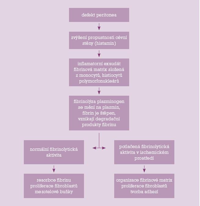 Patofyziologické mechanismy vzniku adhezí.