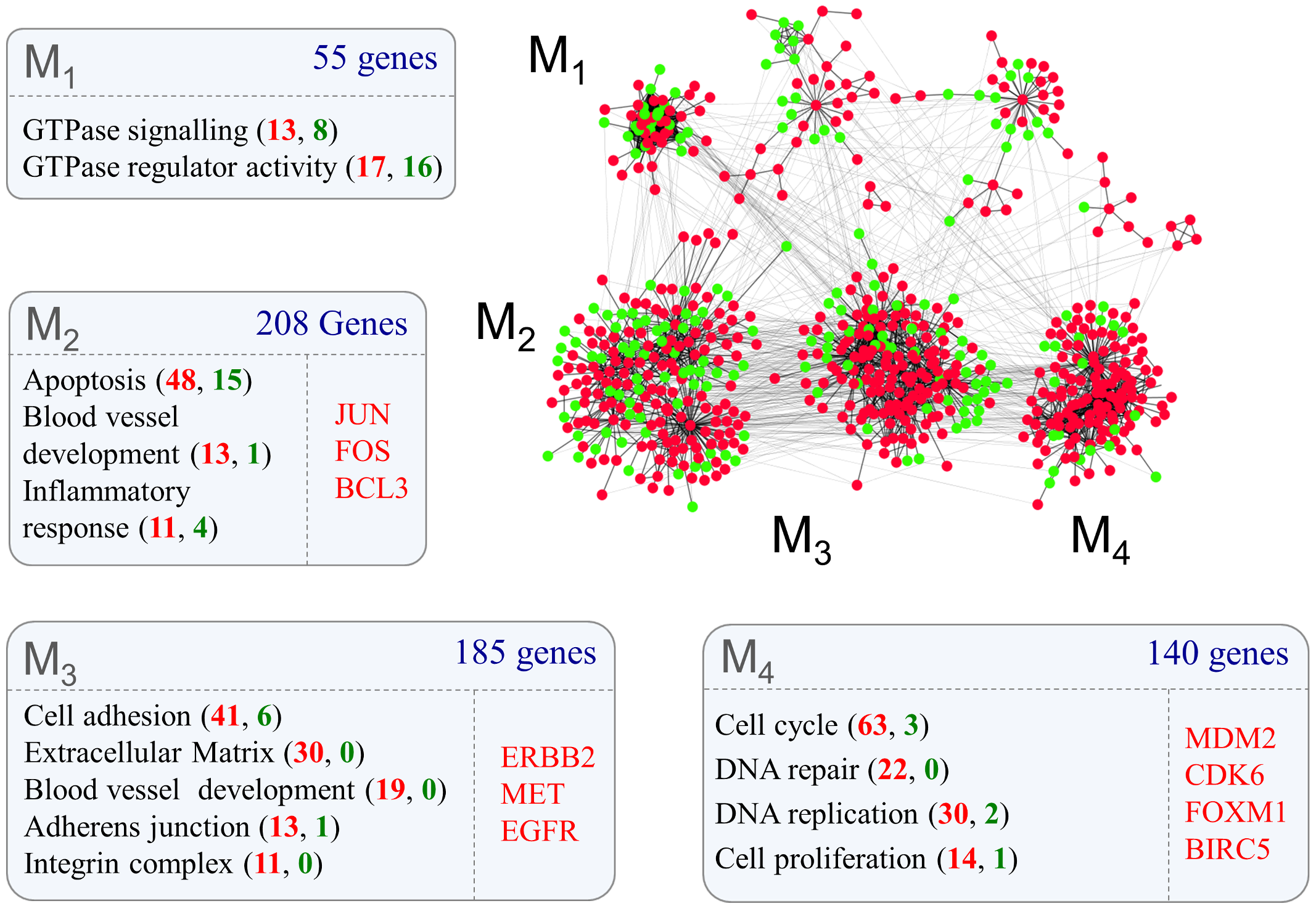 Protein-protein interaction networks representing glioma grade transition reveal functionally distinct modules.