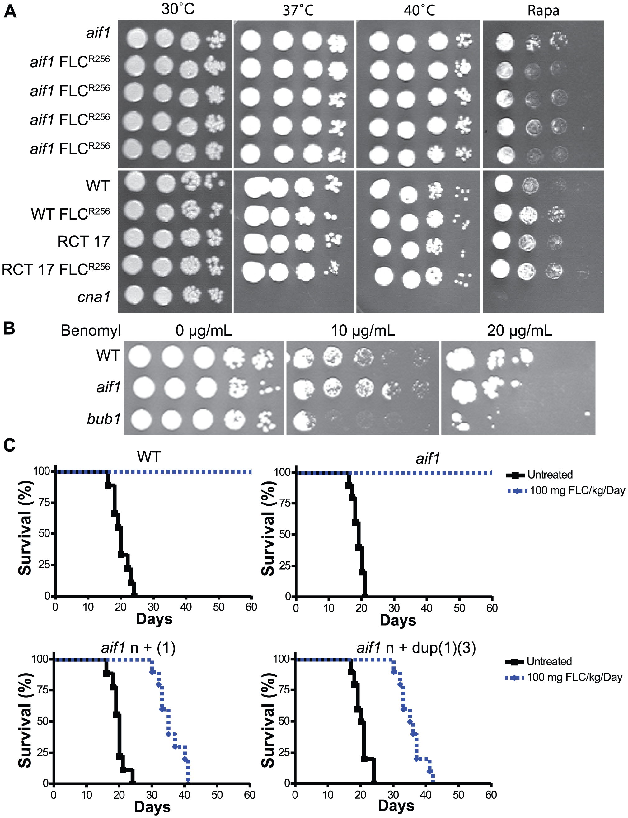 Fluconazole resistant aneuploid clones are stable and virulent. A