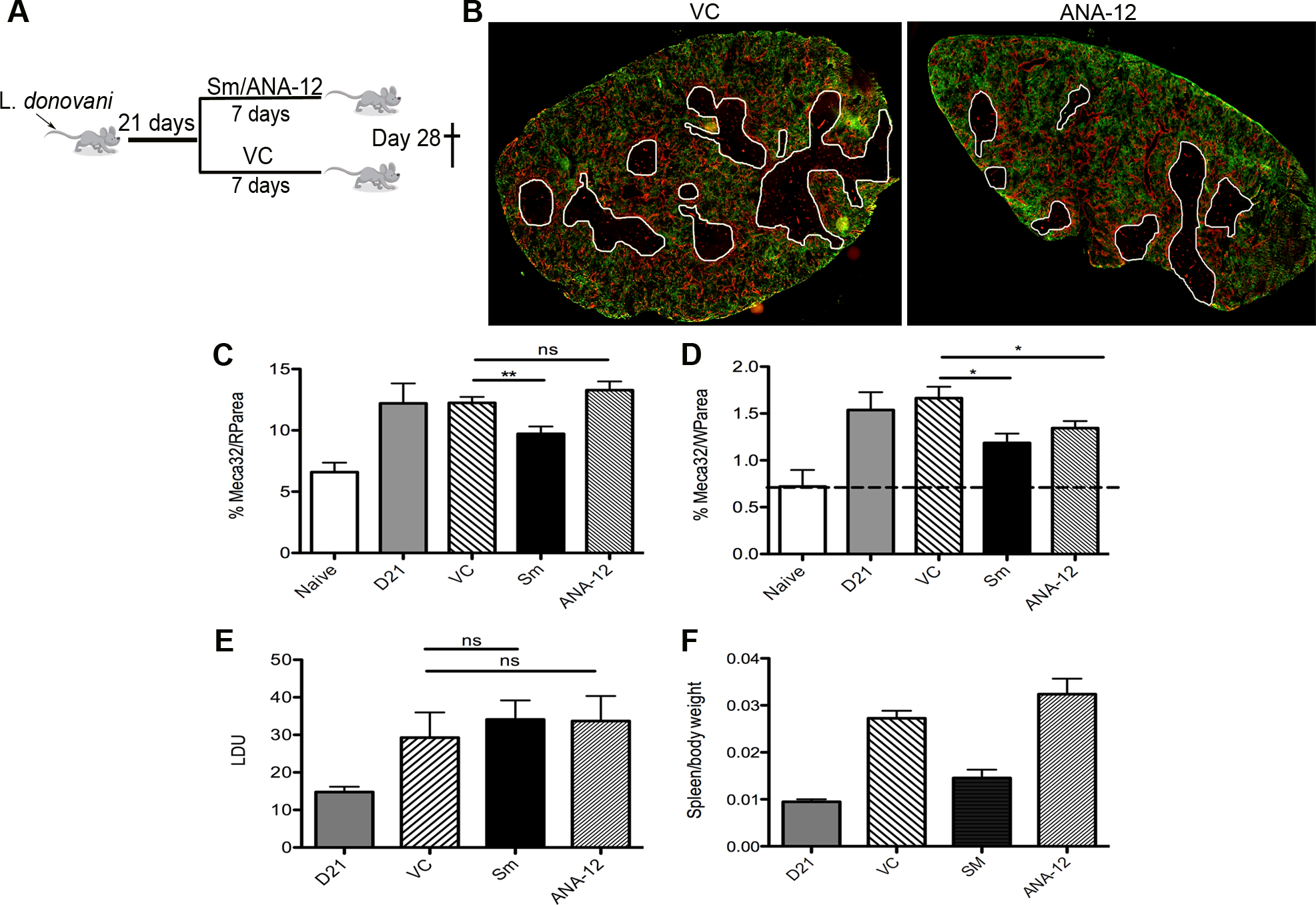 White pulp neovascularization during chronic infection is dependent on Nrtk2.
