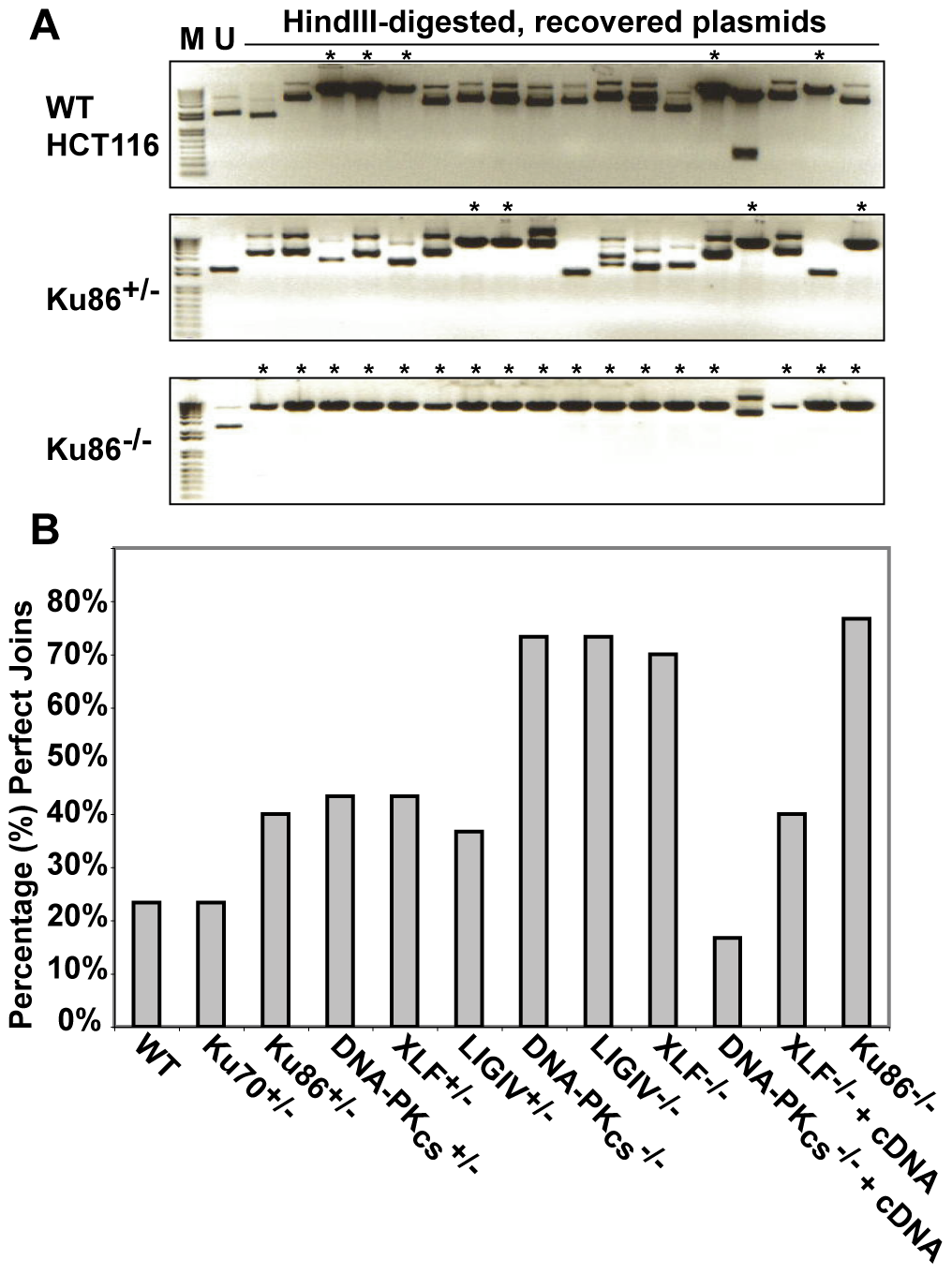 The absence of Ku86 results in predominately microhomology-based end joining.