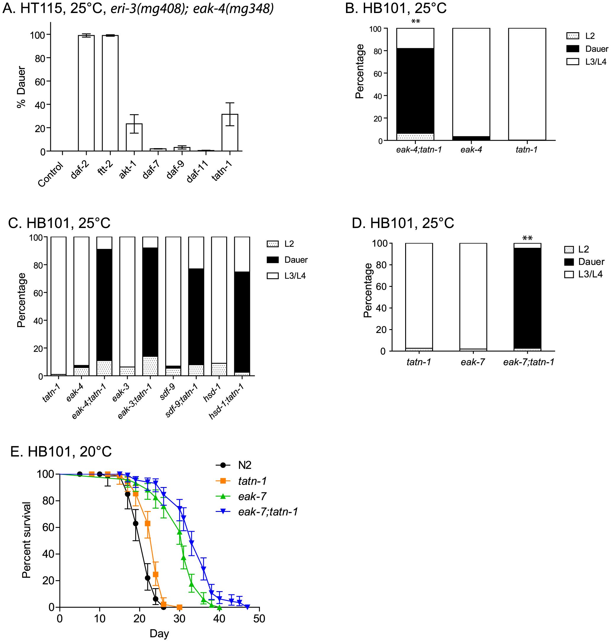 Tyrosine aminotransferase mutations enhance <i>eak</i> dauer and lifespan phenotypes.