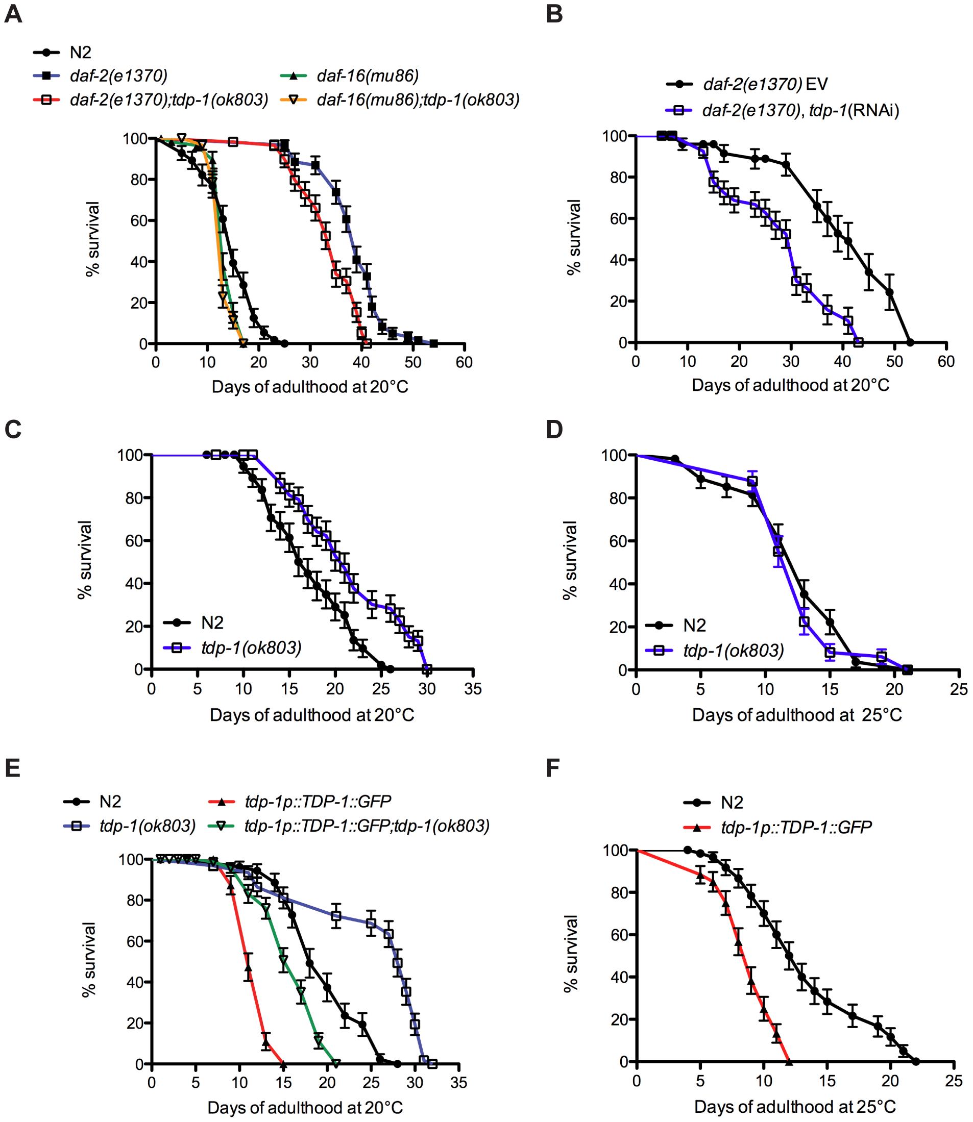 <i>tdp-1</i> regulates lifespan.