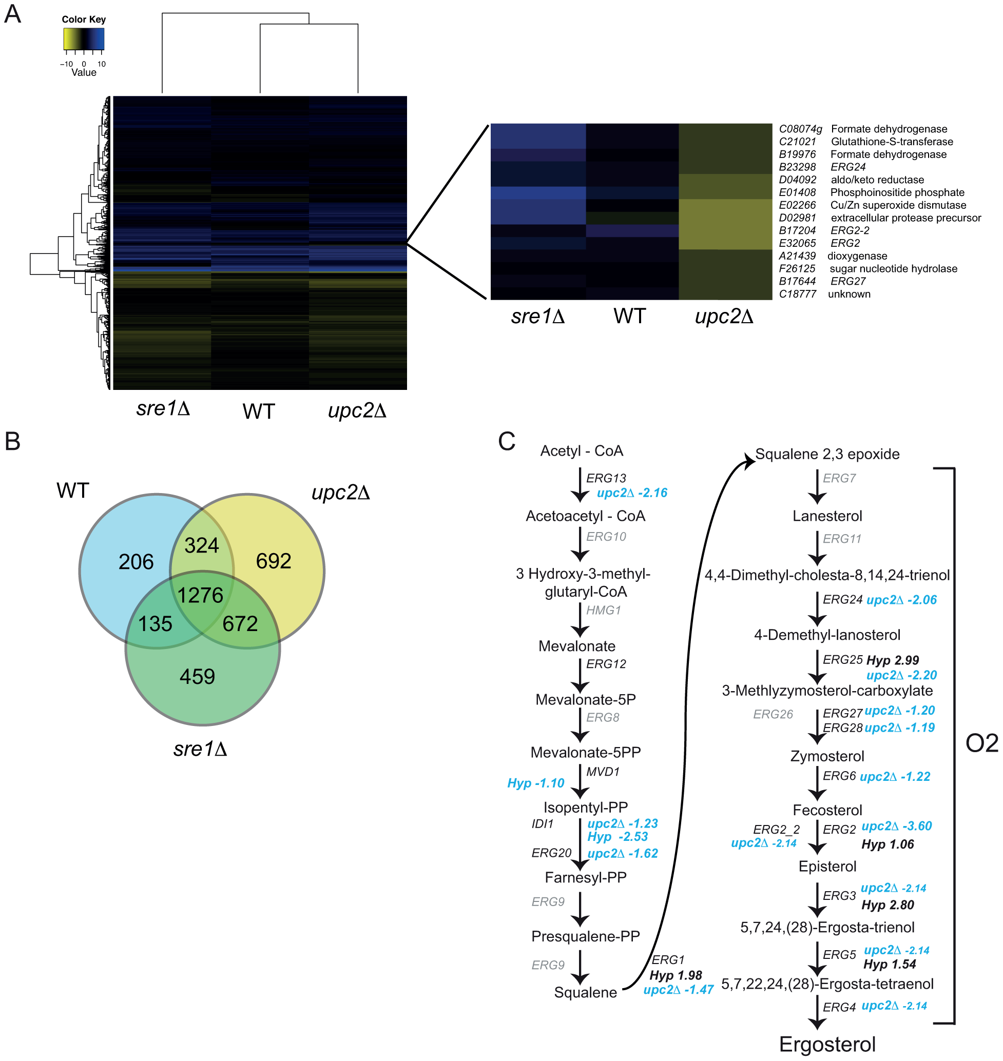YlUpc2 regulates expression of ergosterol genes.