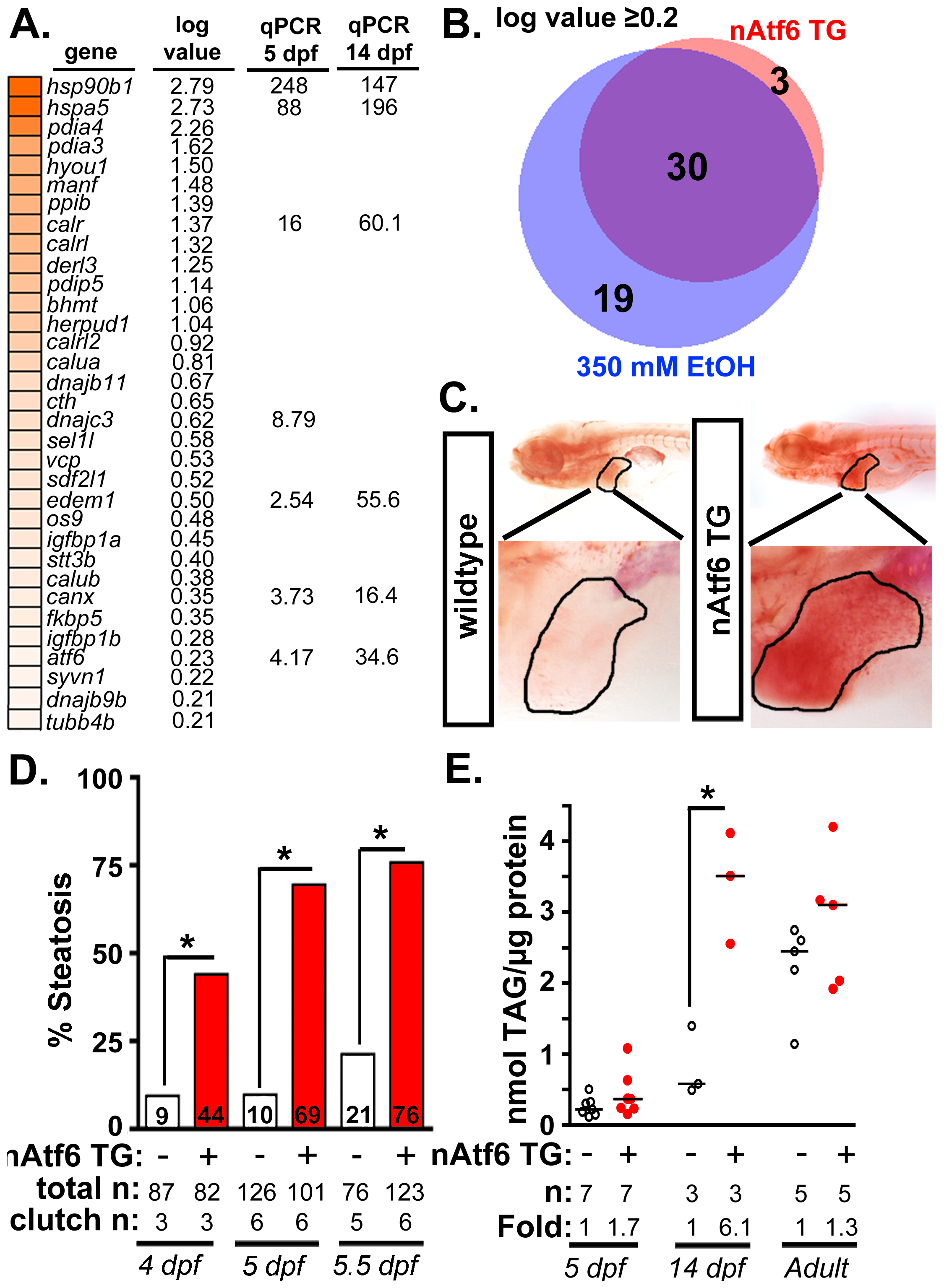 nAtf6 overexpression is sufficient to drive steatosis.