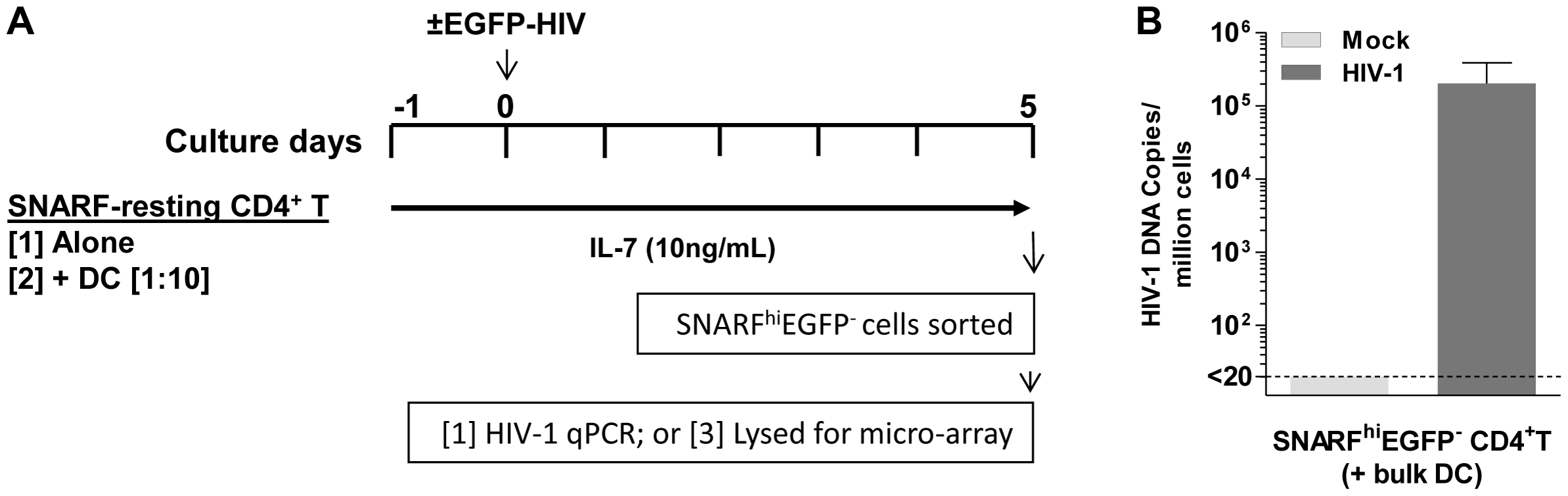 Acquisition of latently infected cells for microarray analysis.