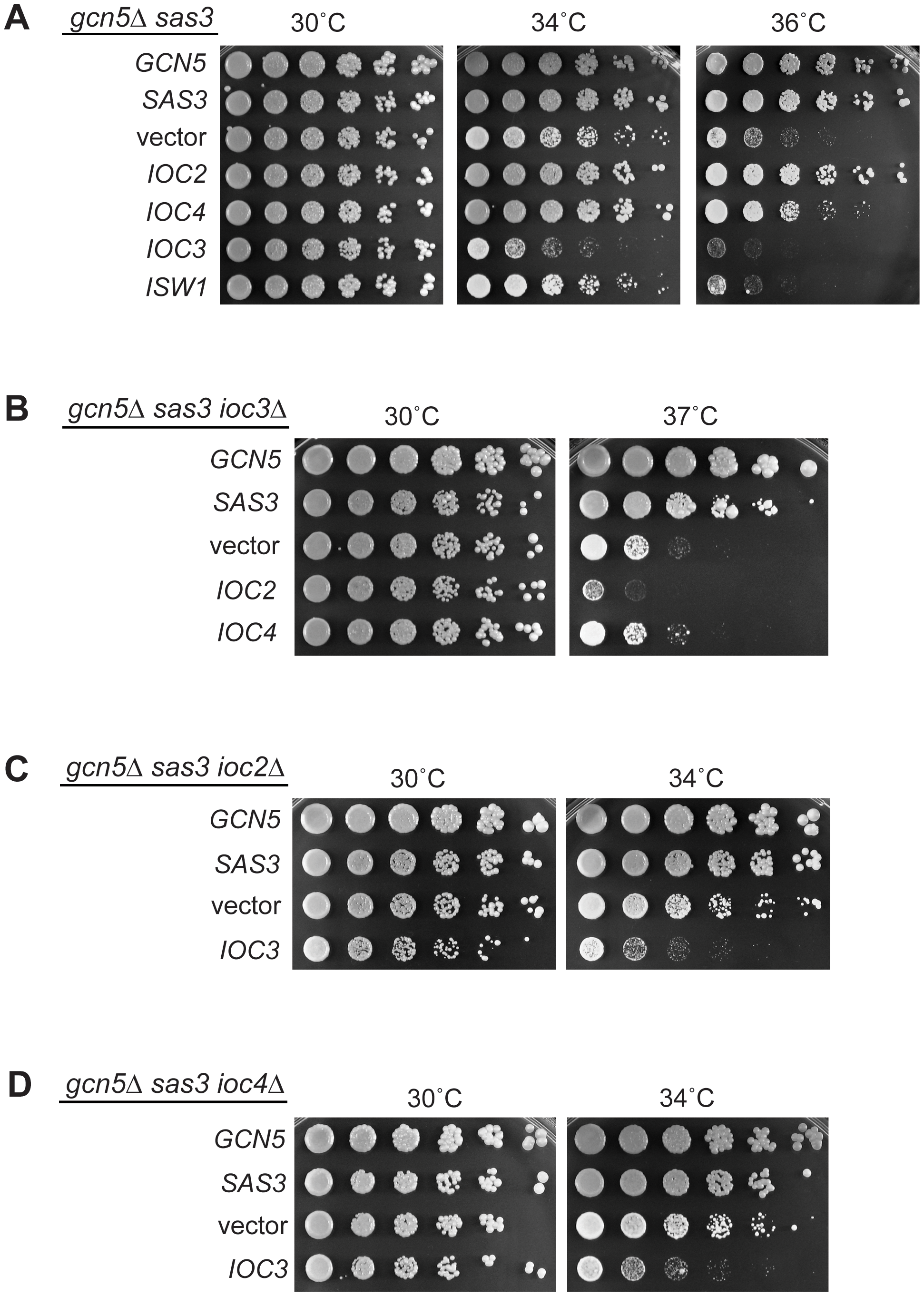 Functional interactions between Isw1a/b complexes and acetyltransferases reveal a dual role for the ATPase Isw1.