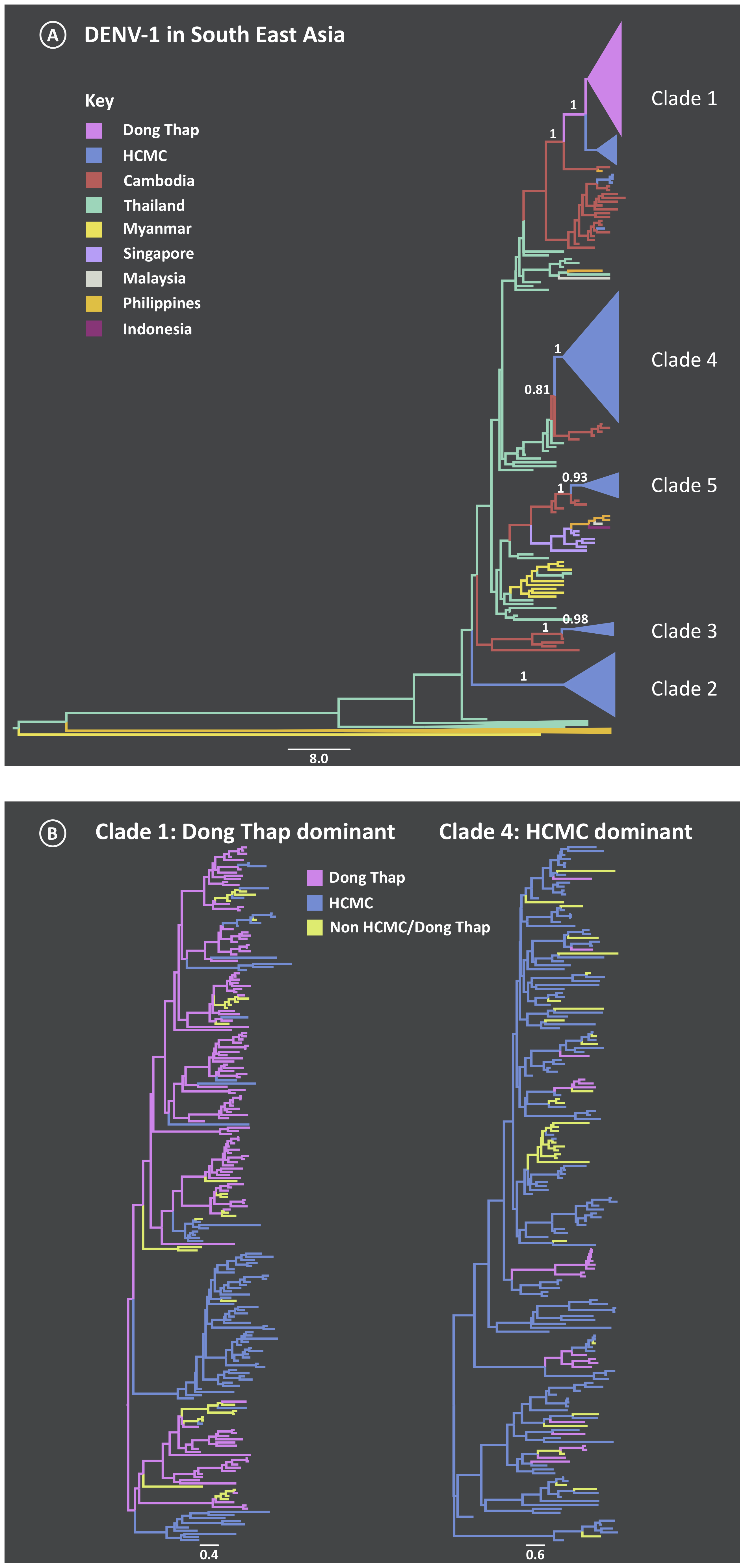Maximum Clade Credibility (MCC) trees from the discrete phylogeography analysis of DENV-1.