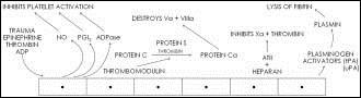 Antitrombogenní vlastnosti endotelilálních buněk, volně podle [1].