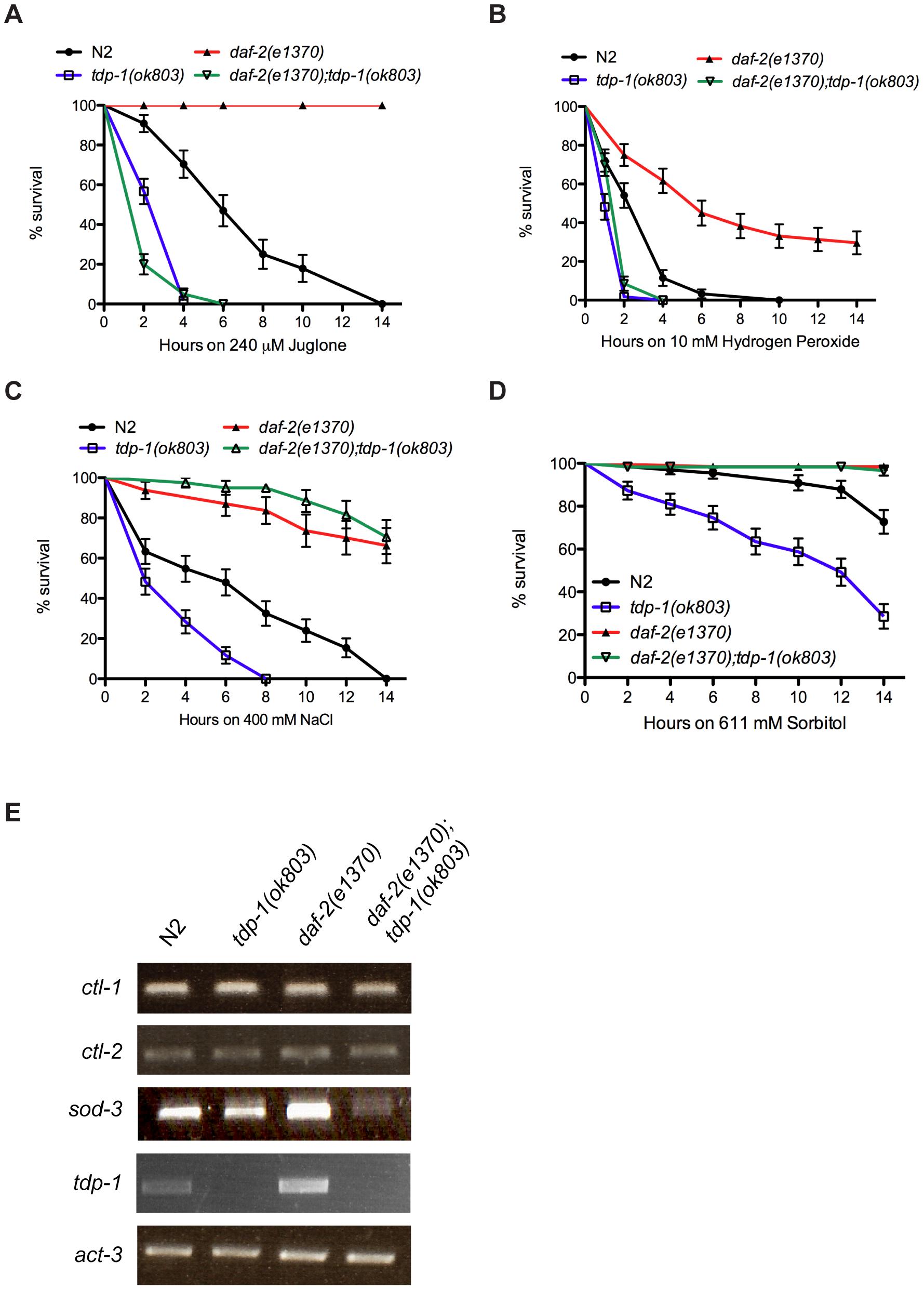 <i>tdp-1</i> specifies stress response signaling.