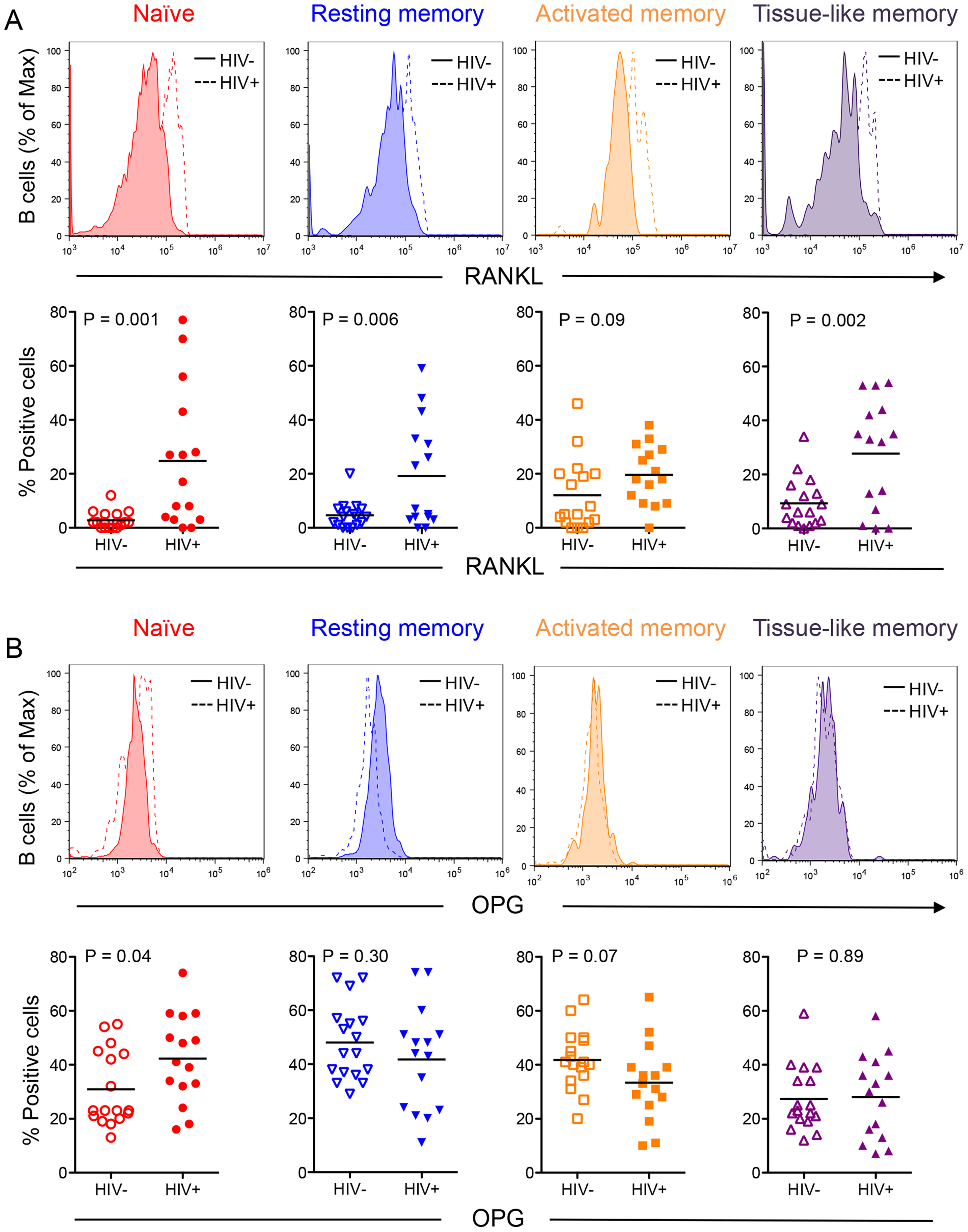 Differential B cell subset RANKL and OPG expression in HIV-negative and HIV-positive individuals.