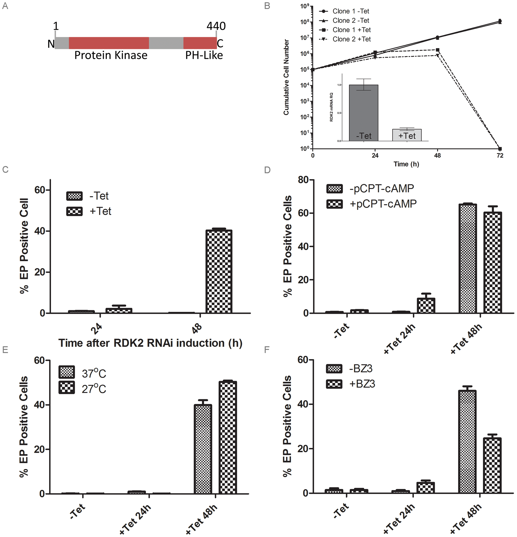 RDK2 is a repressor of BSF to PCF differentiation.